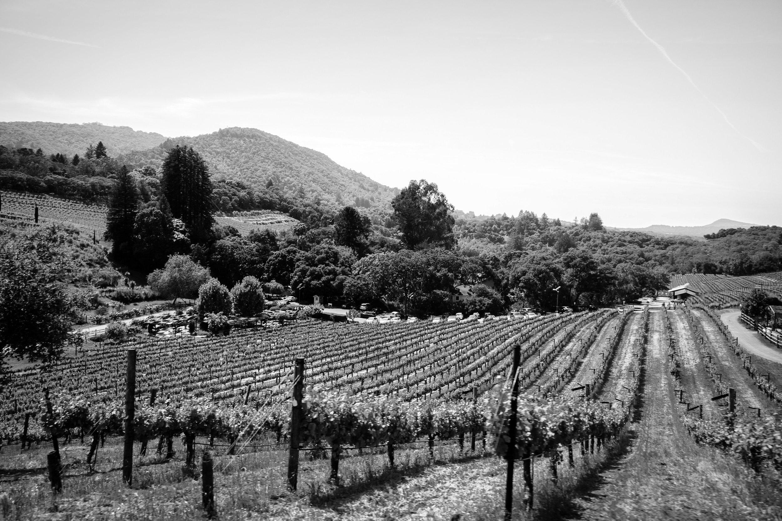 Wine Country 1.jpg