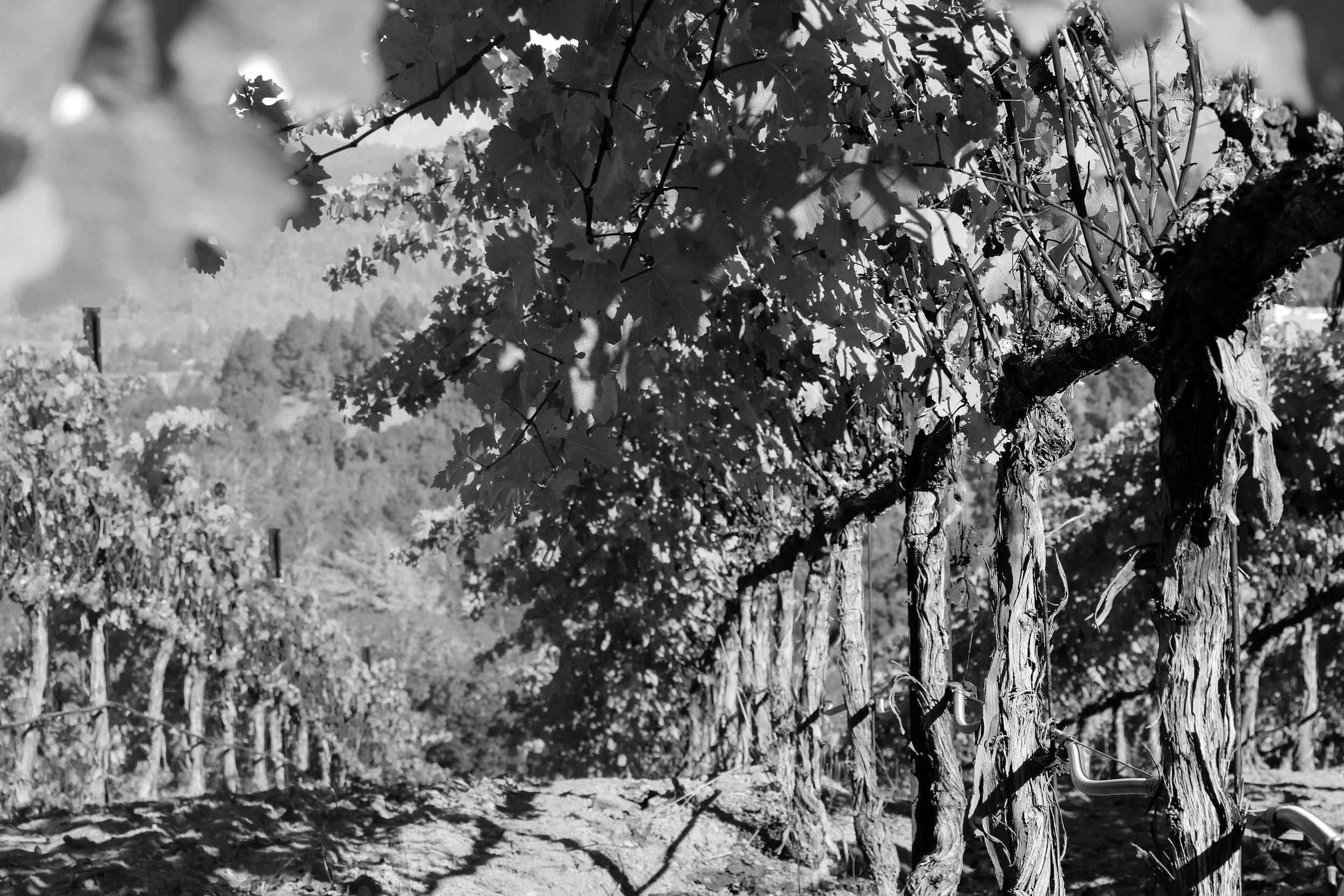 Wine Country 2.jpg