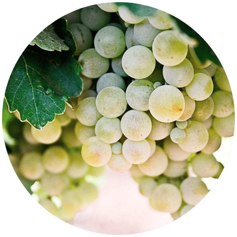 Green+grapes+%282%29.jpg