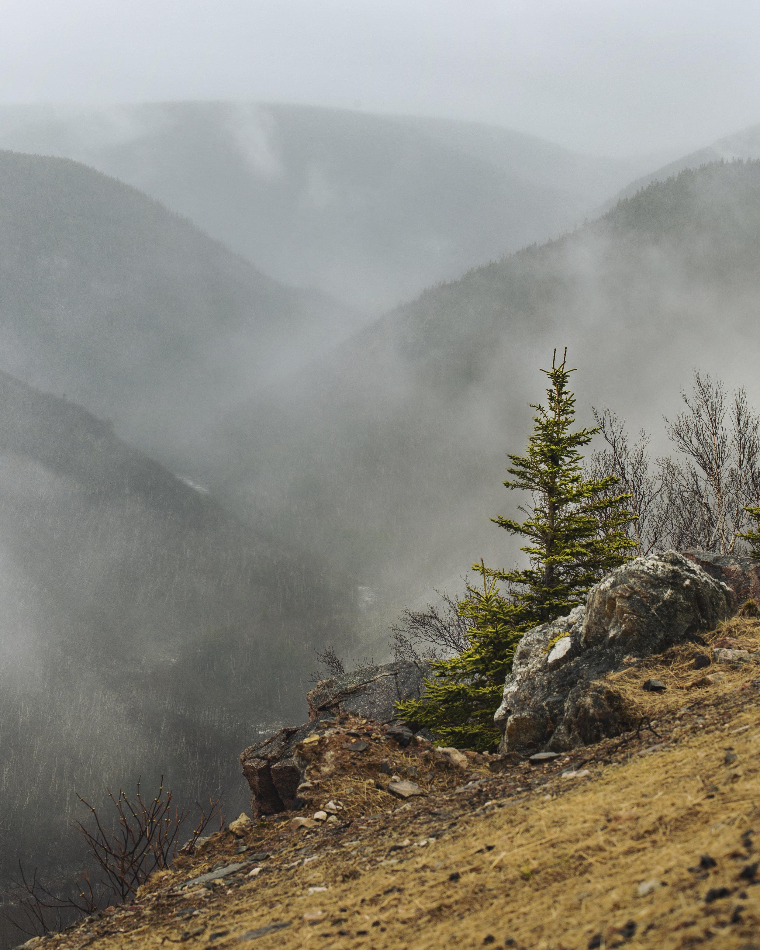 Fog Tree.jpg