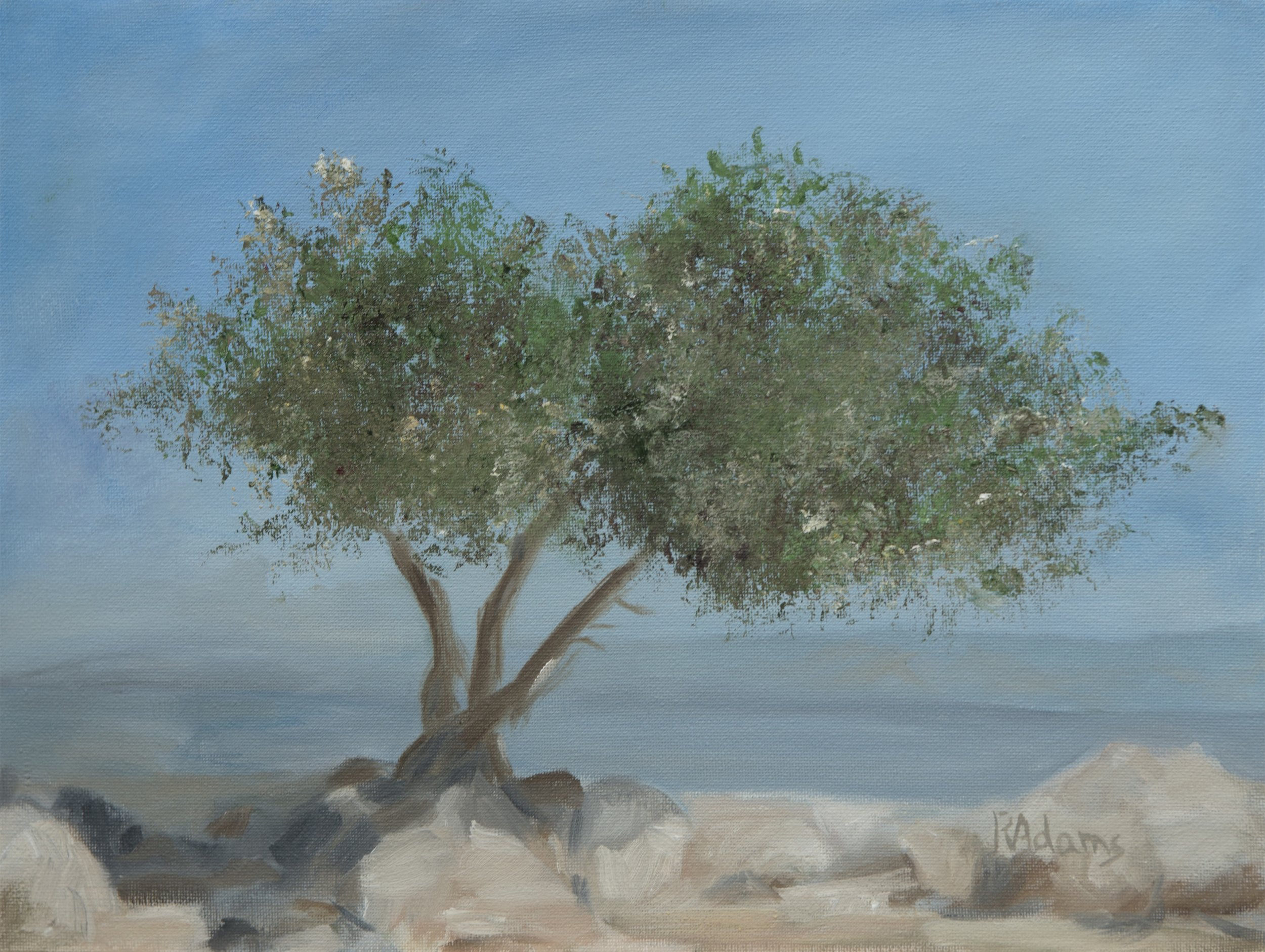 Carob Tree on Mount Arbel.jpg