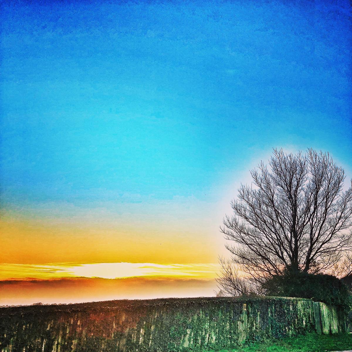 Bare Tree in the Sky