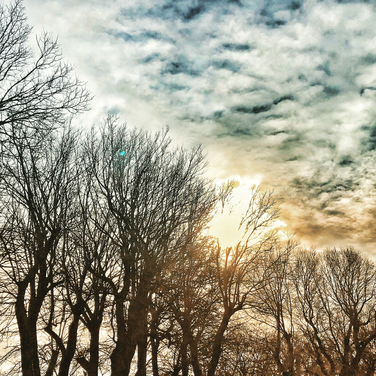 Bare Trees in Cloudy Sky