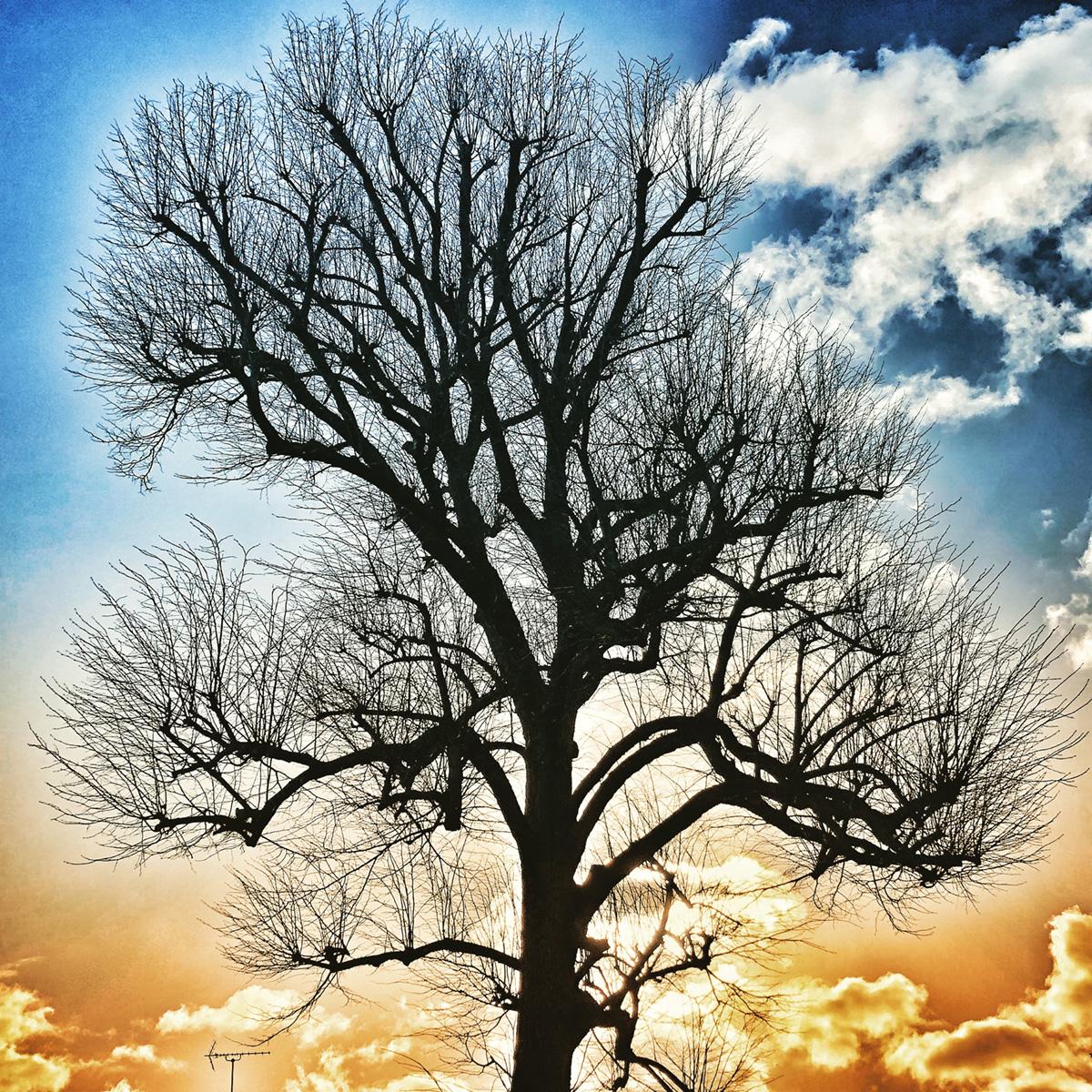 Bare Tree in Golden Sky