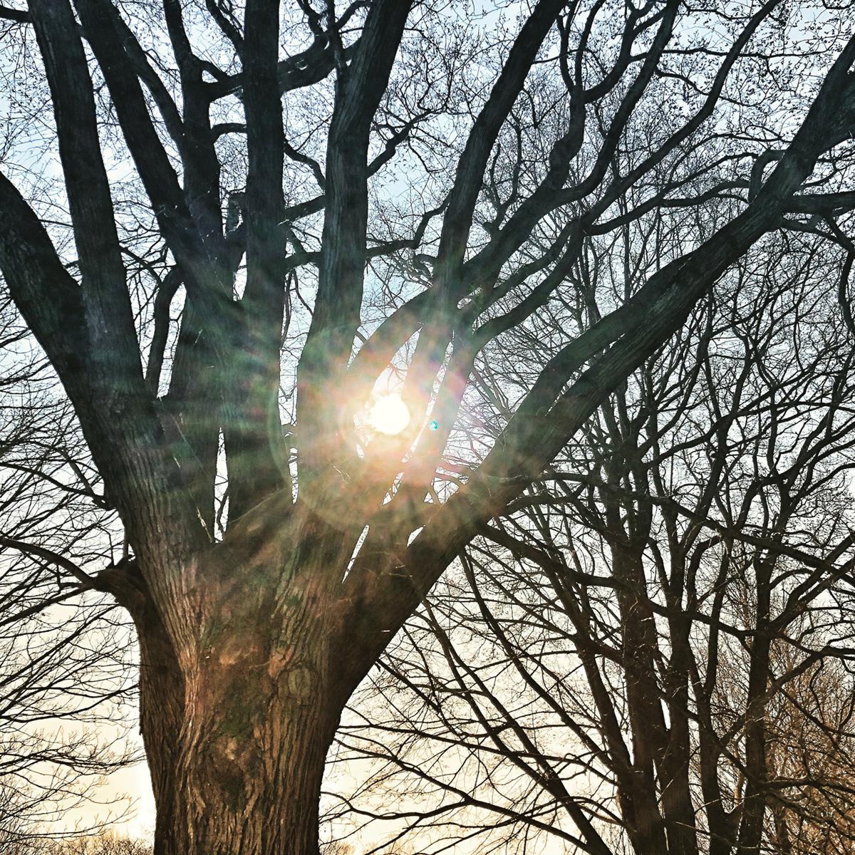 Light Shining Through 3