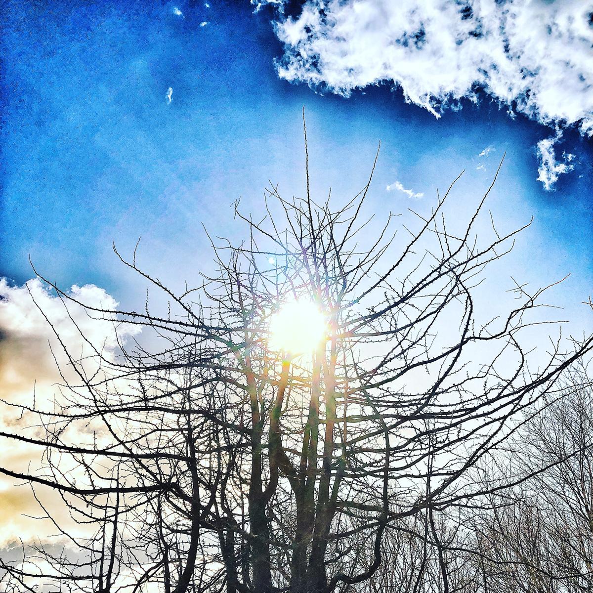 Light Shining Through 4
