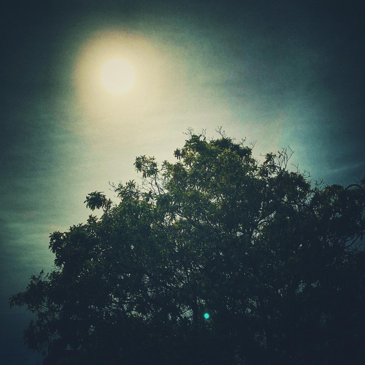 Sun Over Tree