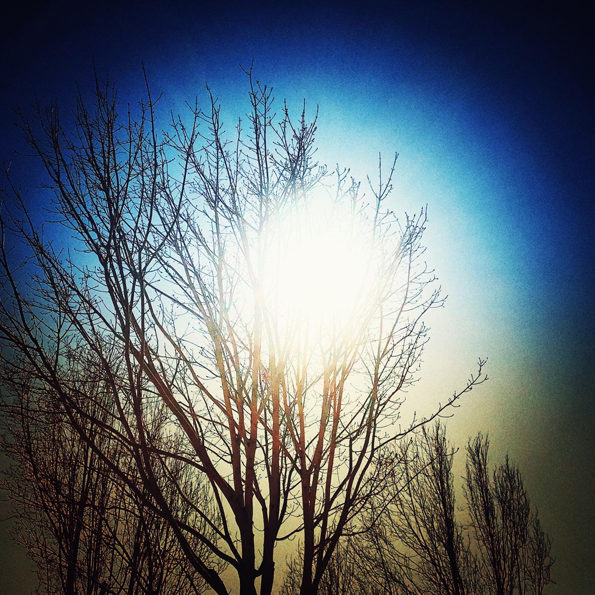 Bright Light in the Bare Tree 1