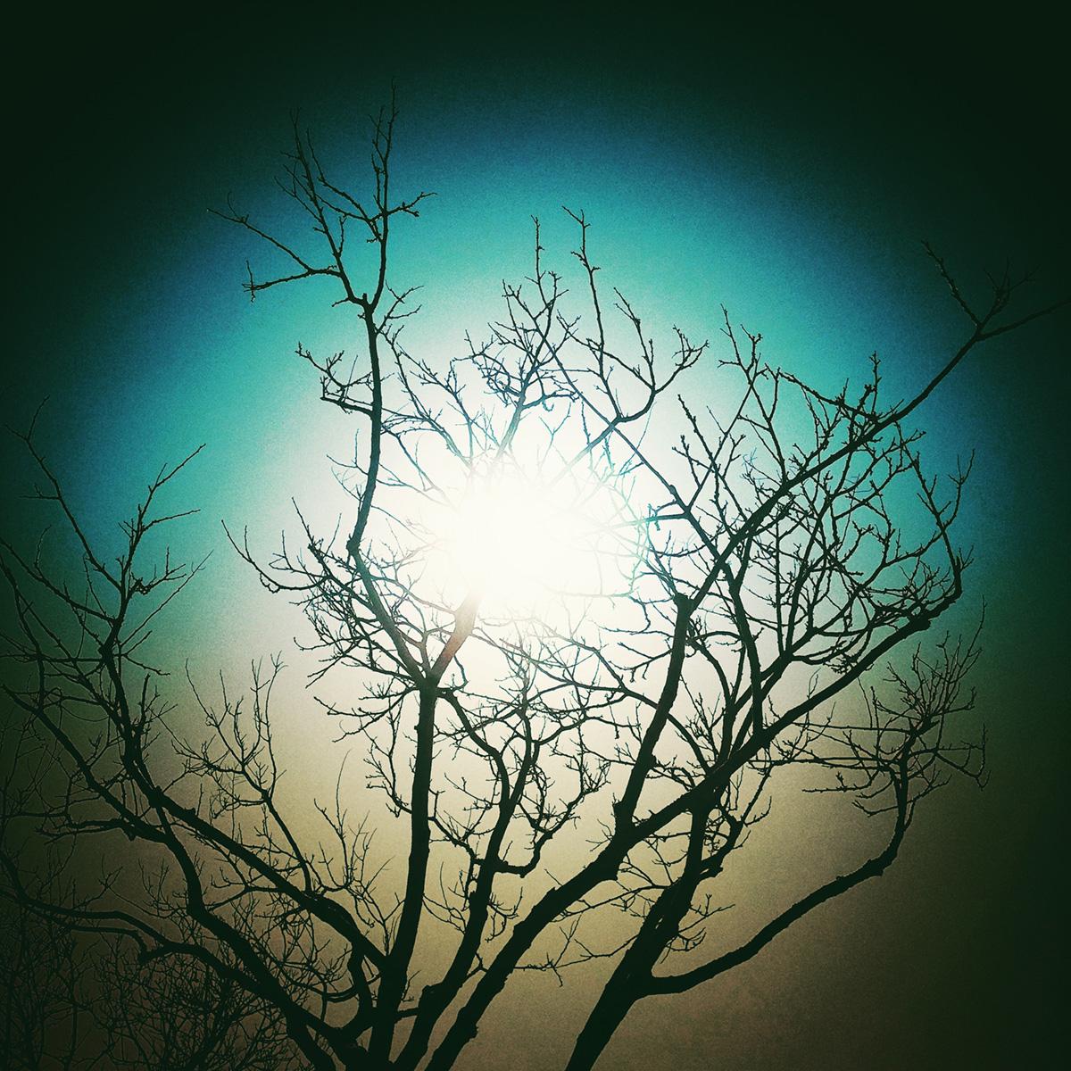 Bright Light in the Bare Tree 2