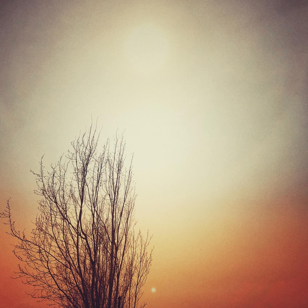 Bare Tree in Smokey Sky