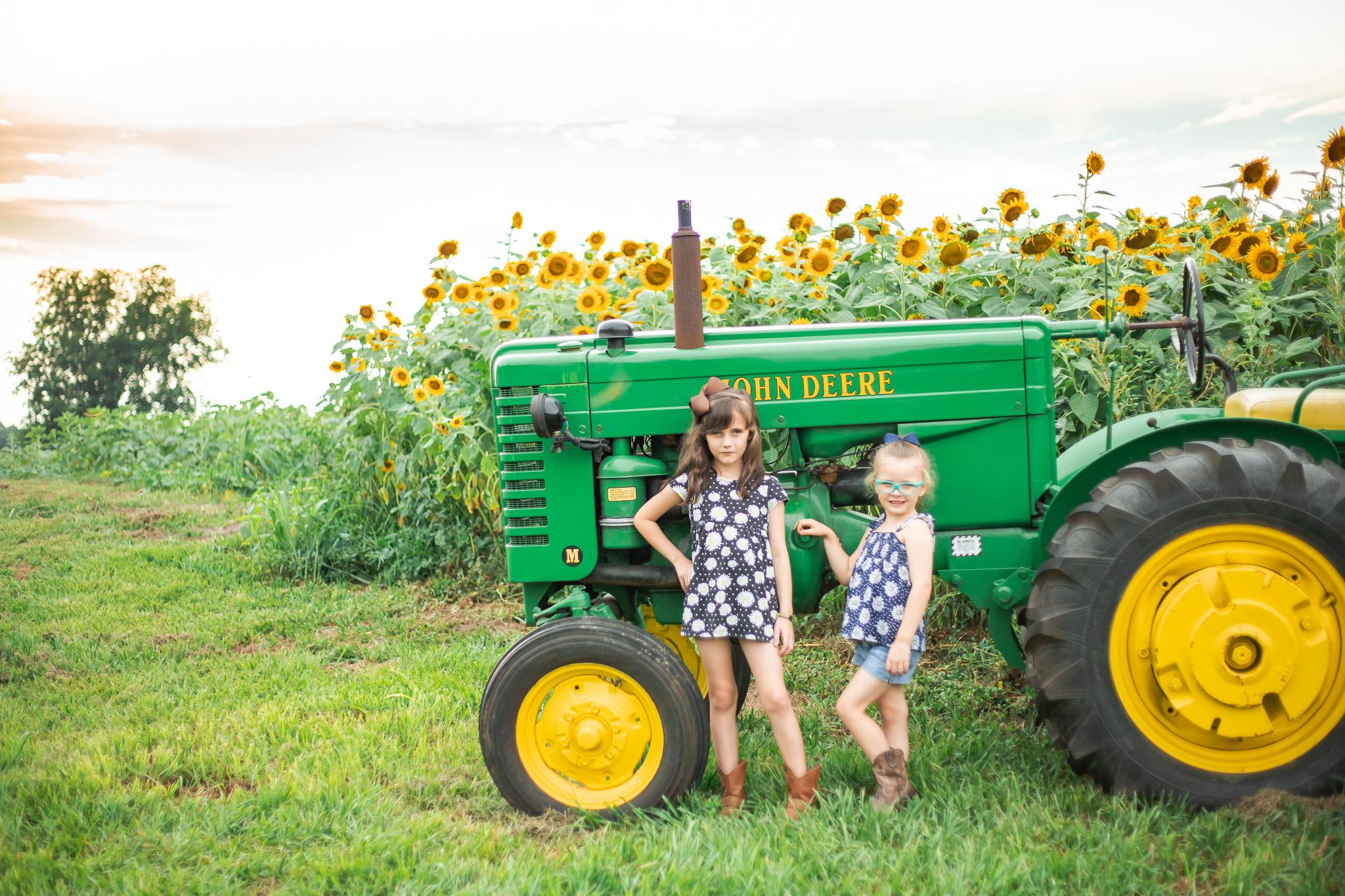 Sunflower Fields-8.jpg