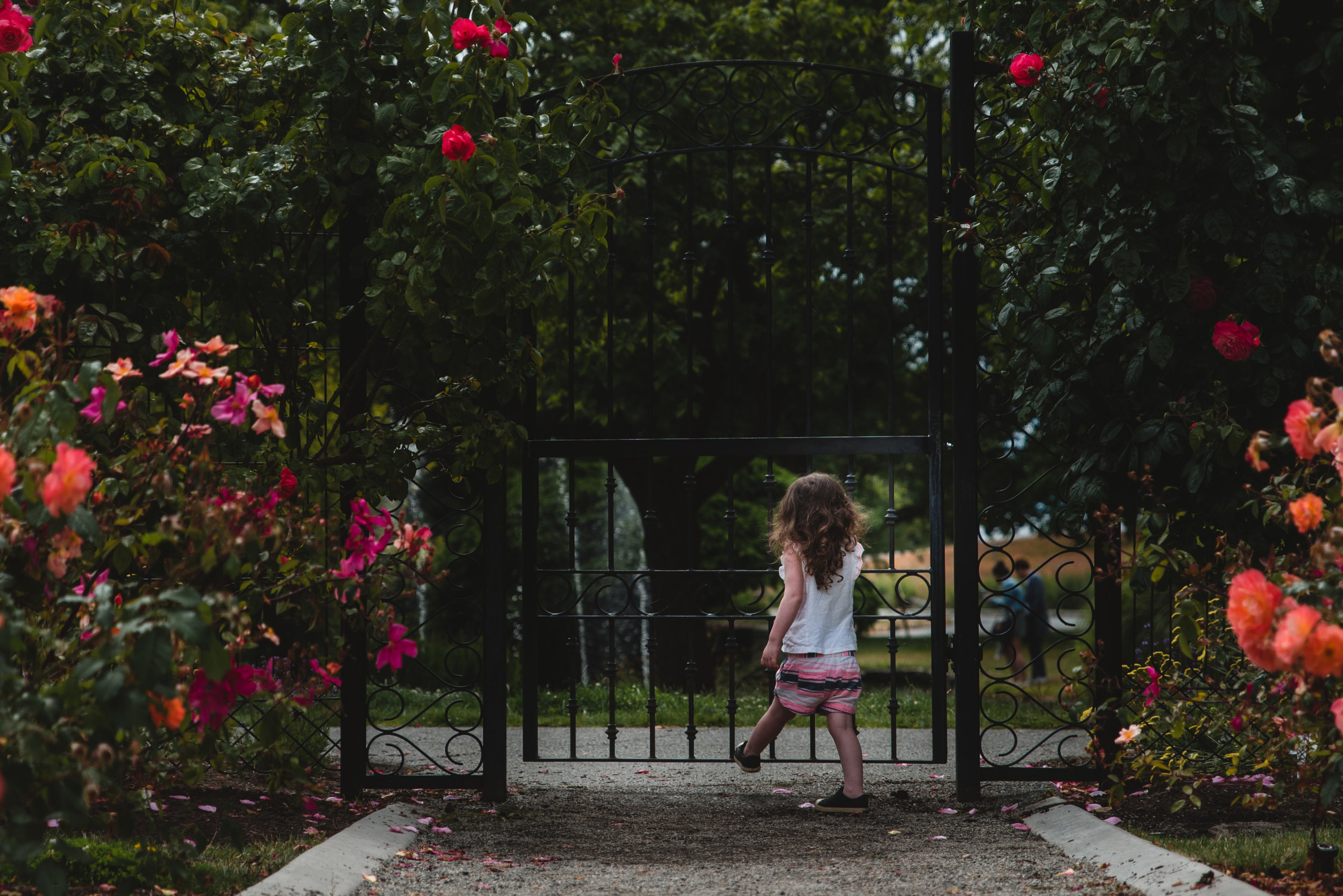 Beacon Hill Park Rose Garden Victoria BC Family Photographer.jpg