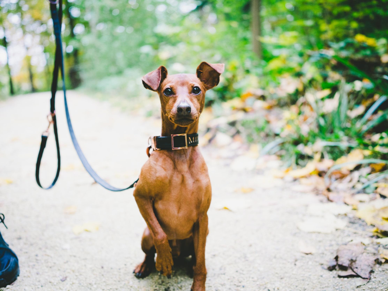 Dog and Puppy Training near Seattle, Issaquah, WA — Jax Dog Drop