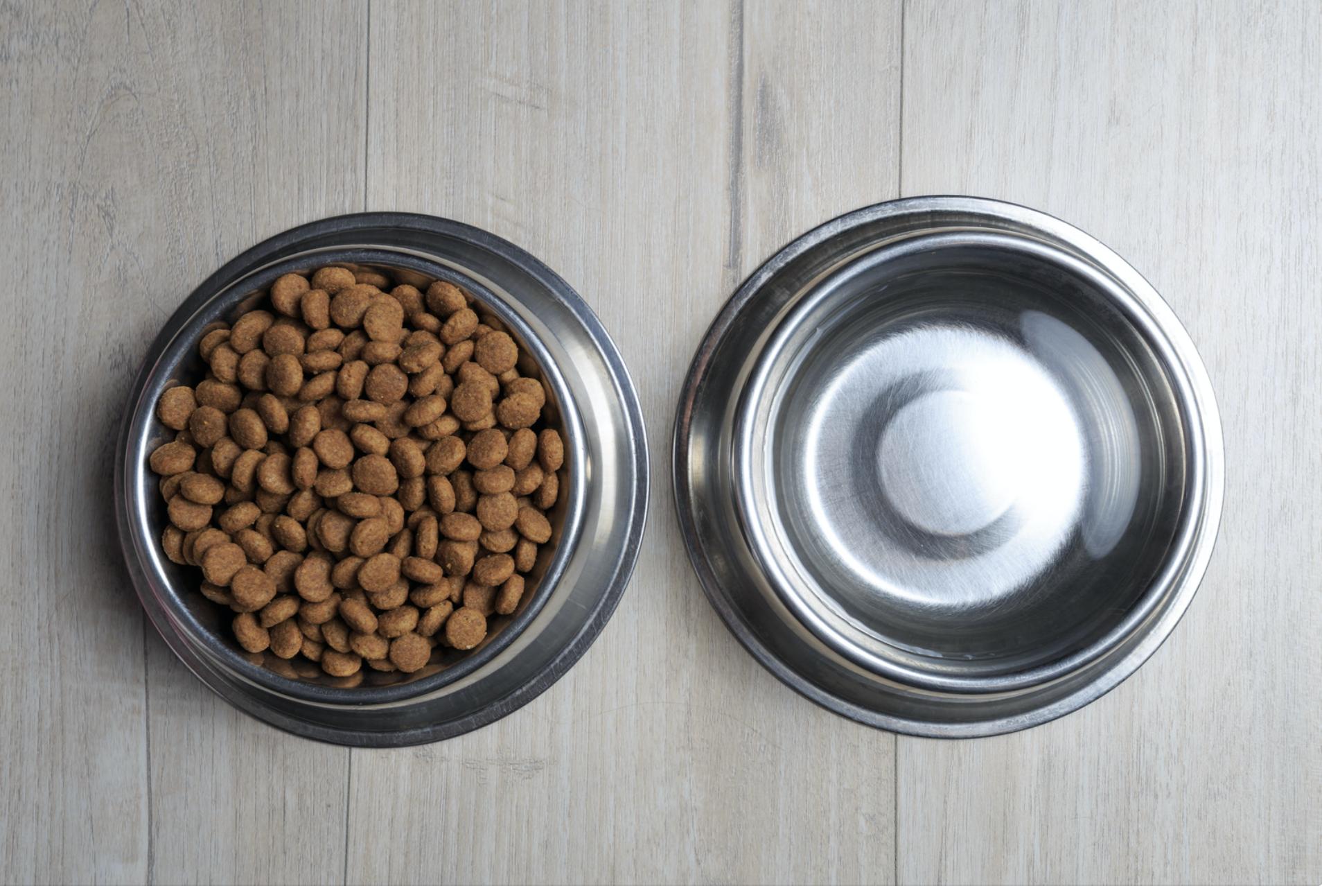 Feeding Puppies Schedule