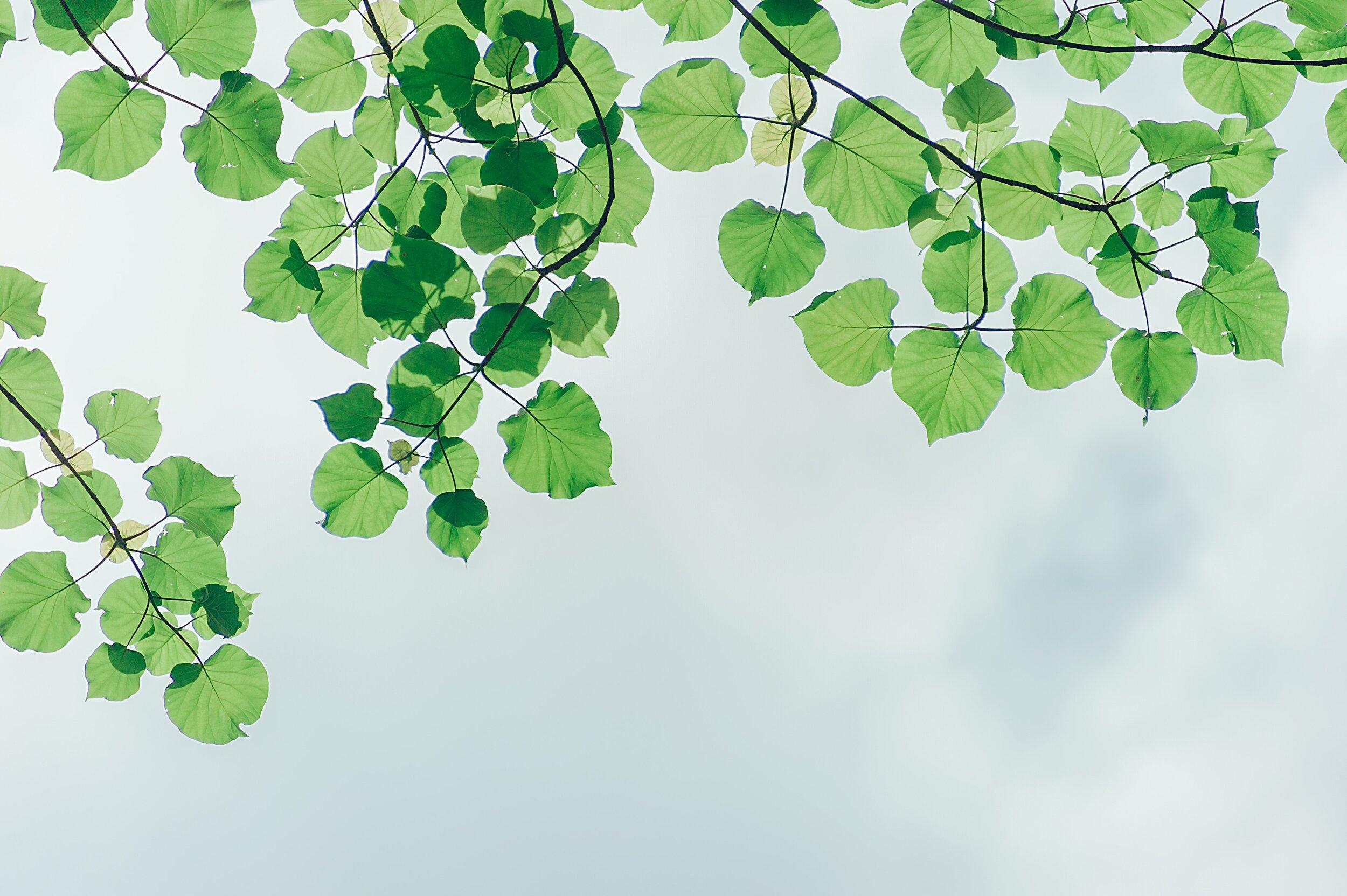 branches-cloudy-environment-1131458.jpg