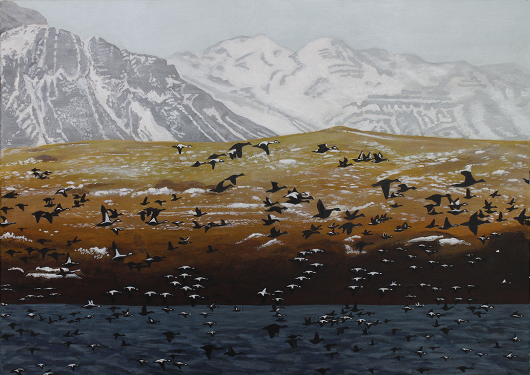 Eider ducks returning to Iceland early Spring    70 cm (w) x 49.5 cm (h)