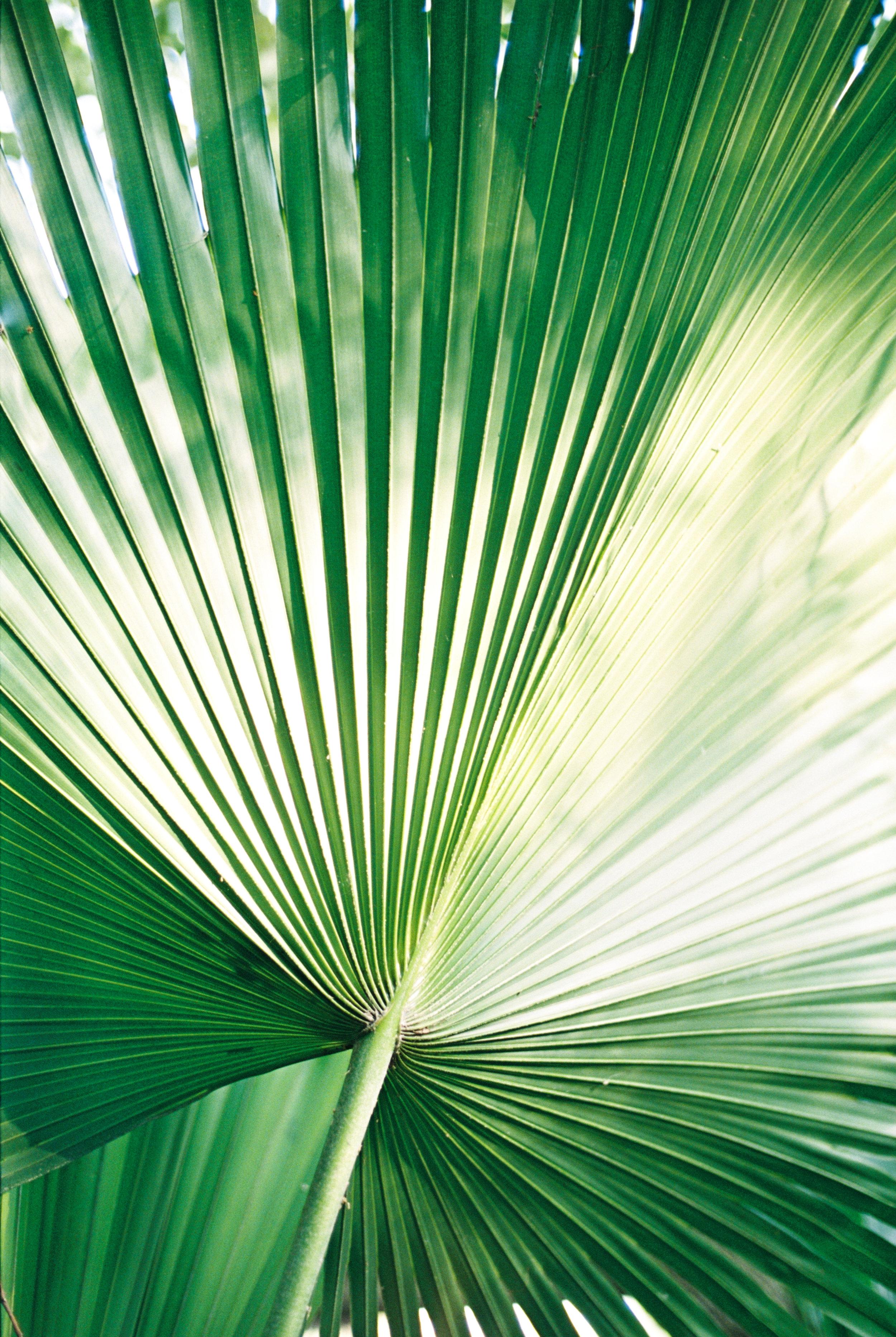 Palm_1.jpg