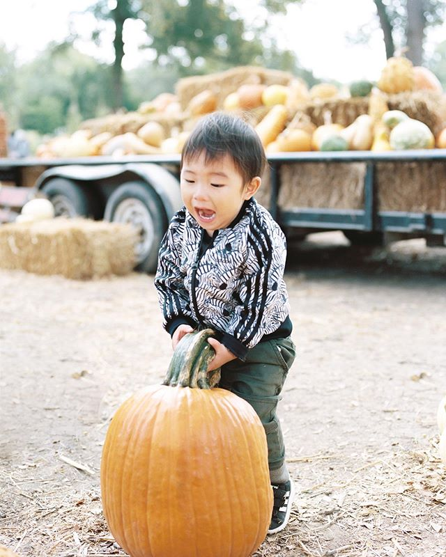 Happy November y'all! 🍁Loving the warm colors of fall and it helps that this lil guy's having a blast at the pumpkin patch🤪  Lab @photovisionprints . . . . . . #priscillamchoiphoto #bellelumieremagazine #filmphotography #filmisnotdead #filmcommunity #filmcollective #ishootfilm #pentax645n #mediumformat #portra400 #austinphotographer #austinfilmphotographer #lifestylephotographer #portraitphotographer #familyphotographer #filmphotographer #thatsdarling #fineartsportraits #preciousmoments #babiesonfilm #babyphotography #kidsonfilm #candidchildhood #pumpkinpatch #austinfamilyphotographer