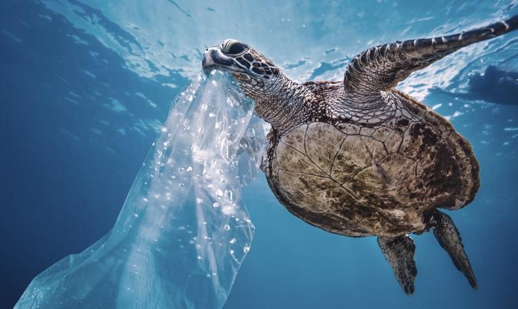 image-schranz-turtle.jpg