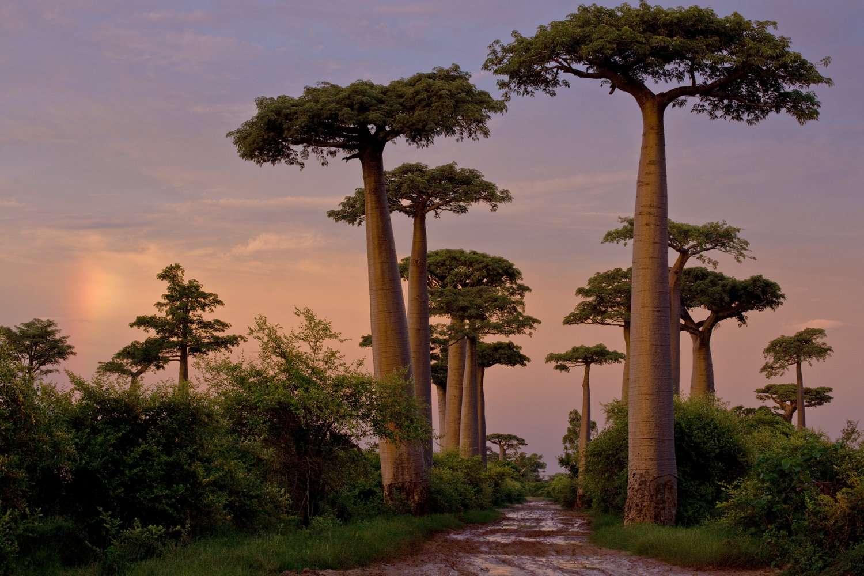 CristinaMittermeier-Photography-BeautifulPlanet-011-Madagascar.jpg