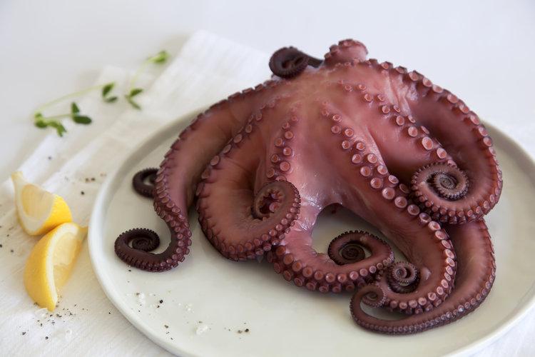 Octopus+whole.jpg