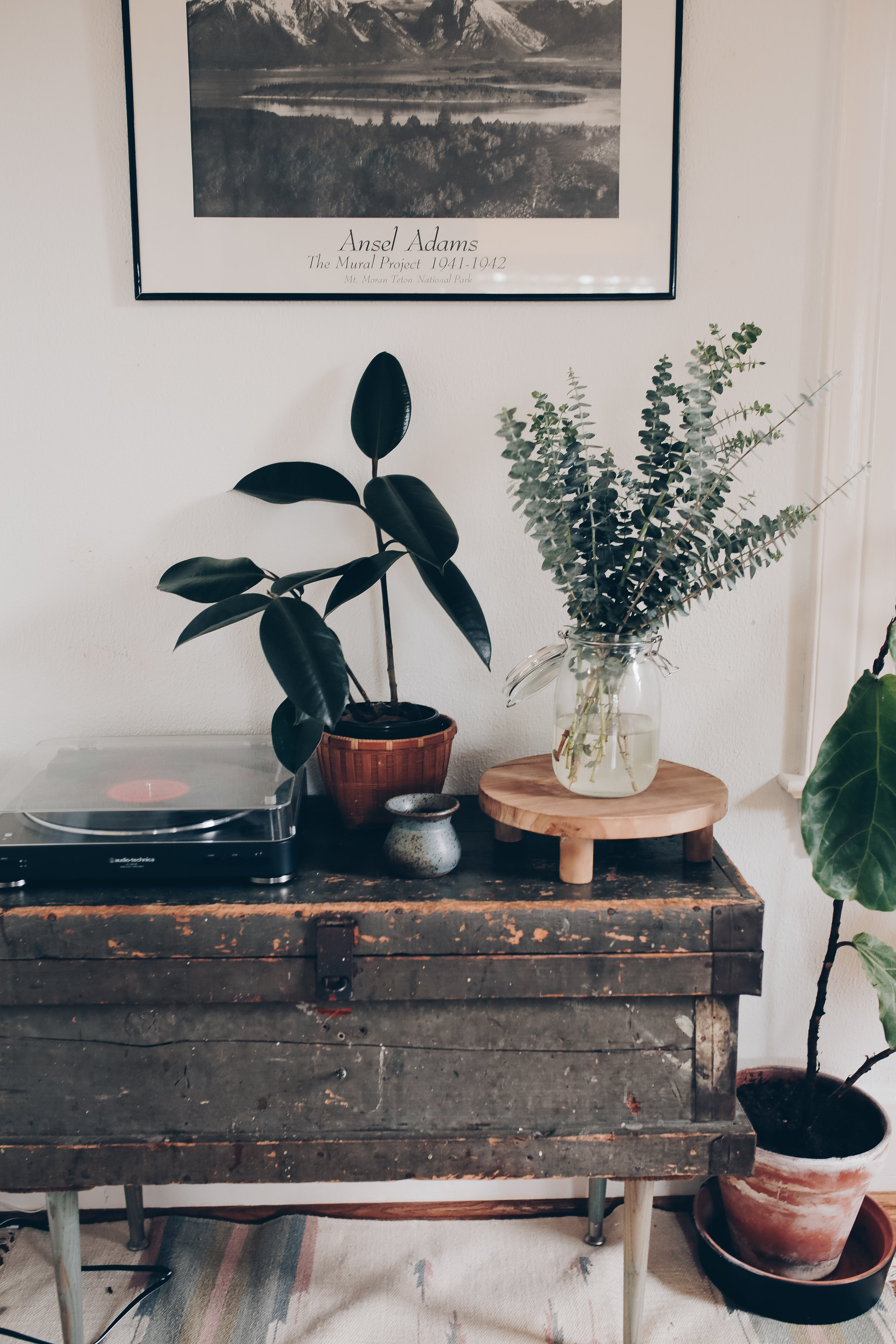 how to decorate your home with indoor plants from livingforaged.com
