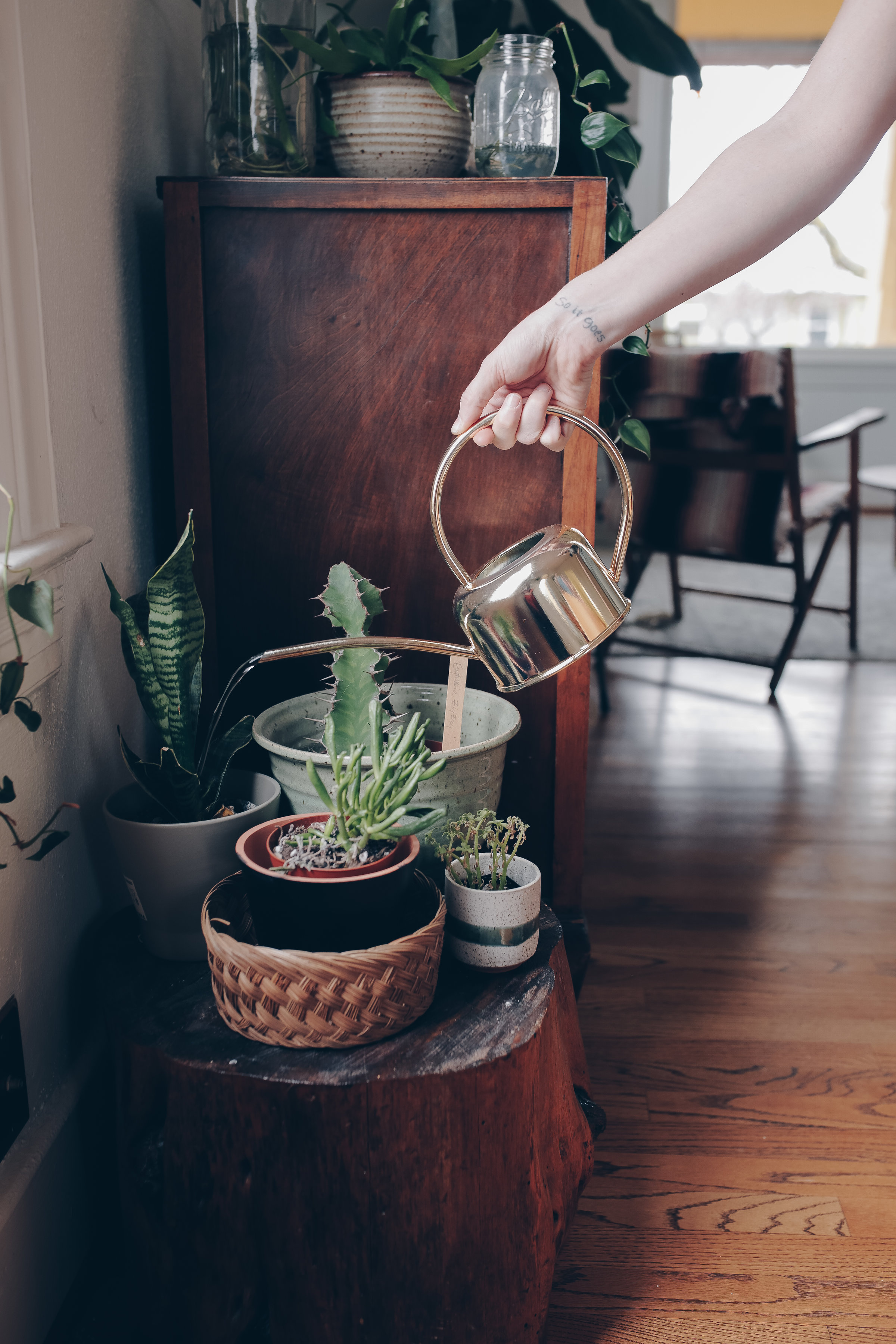 decorating your boho home with indoor plants from livingforaged.com