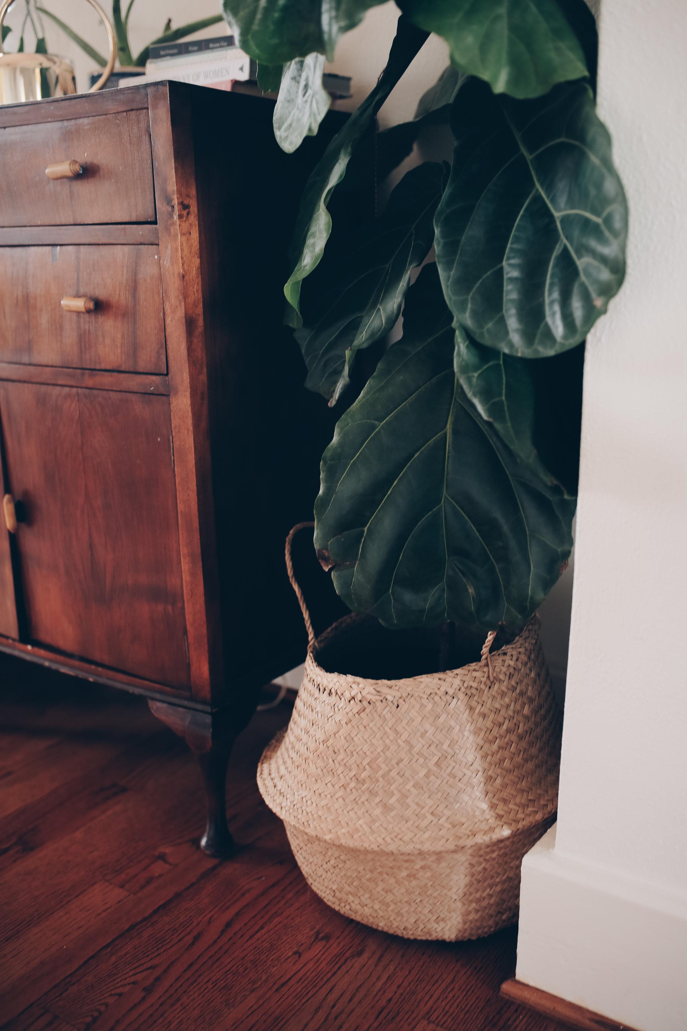 boho home decor with indoor plants from livingforaged.com