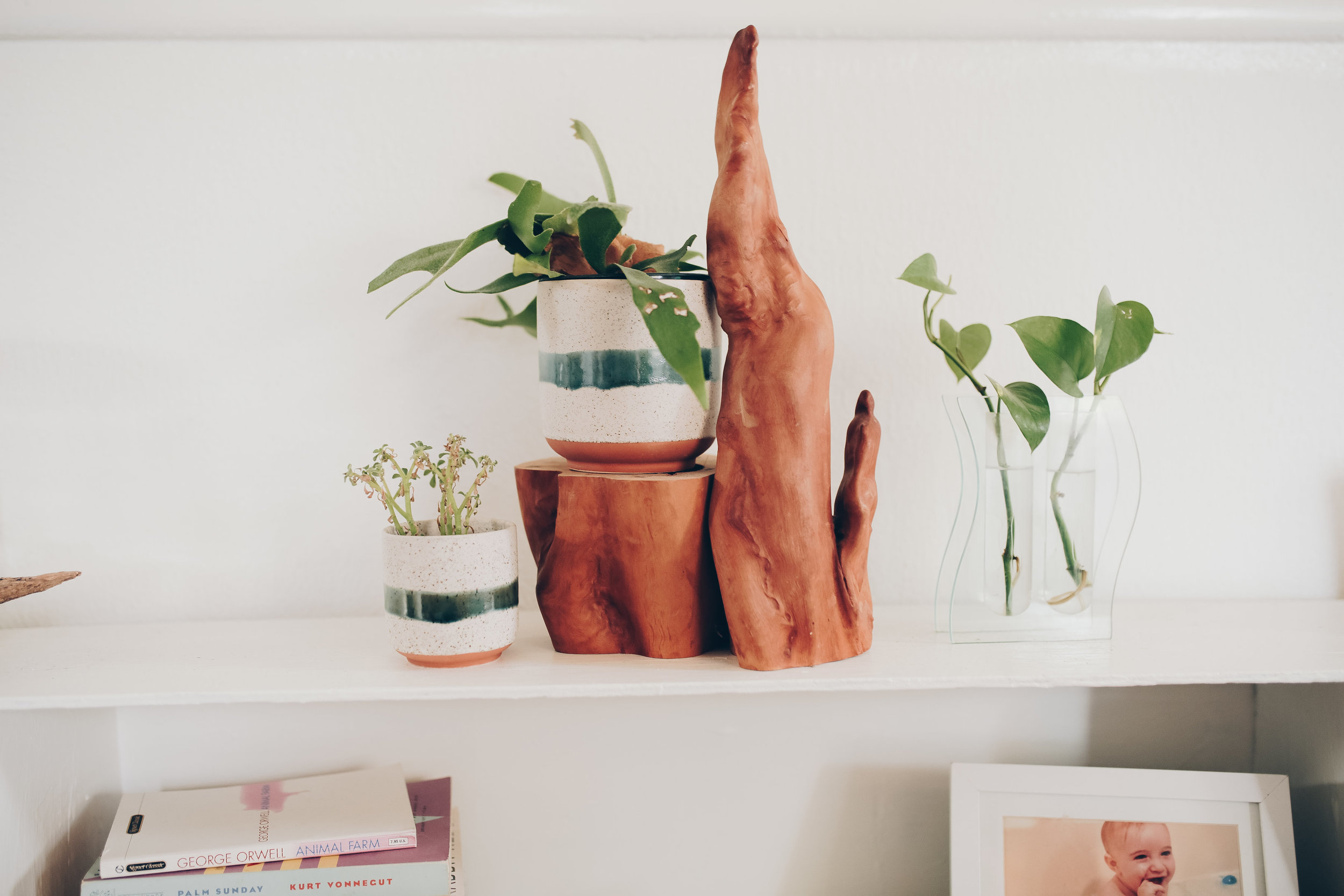indoor plant storage and containers from foragedhome.com