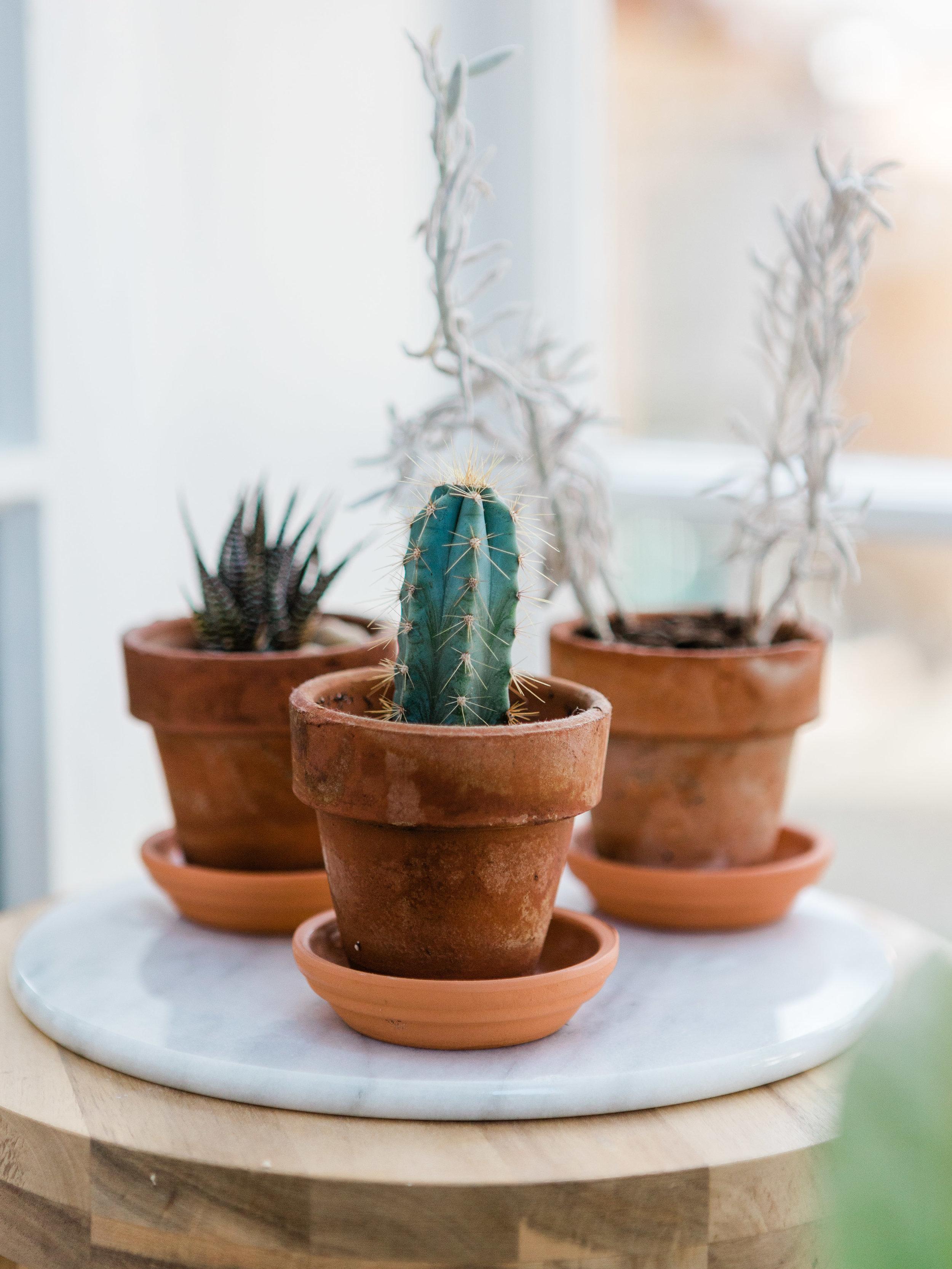 mini succulents in terra cotta pots