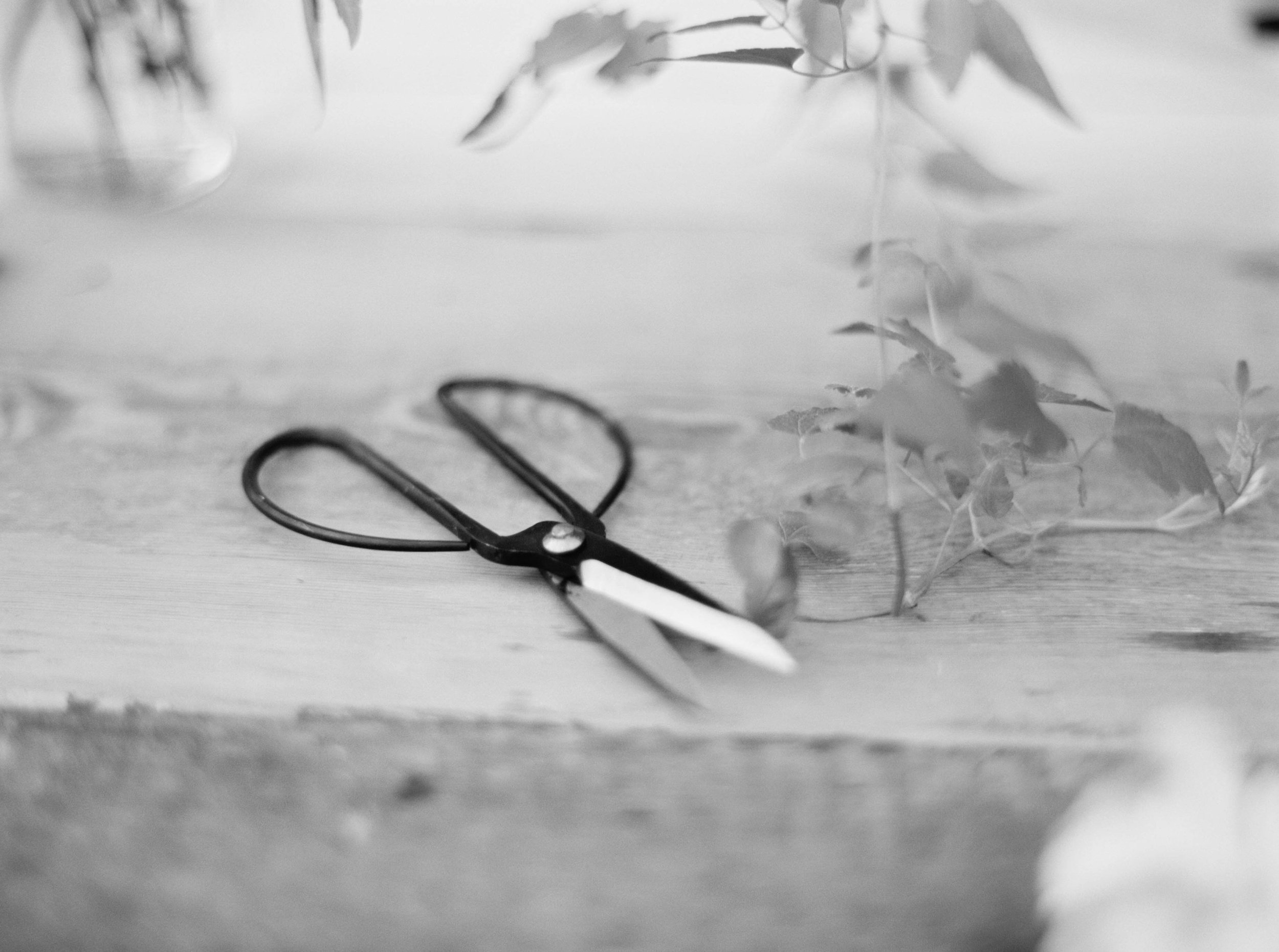 japanese shears from foraged home
