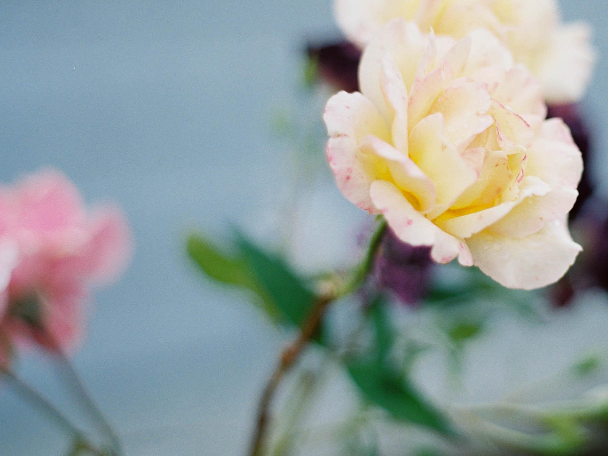 portland oregon roses