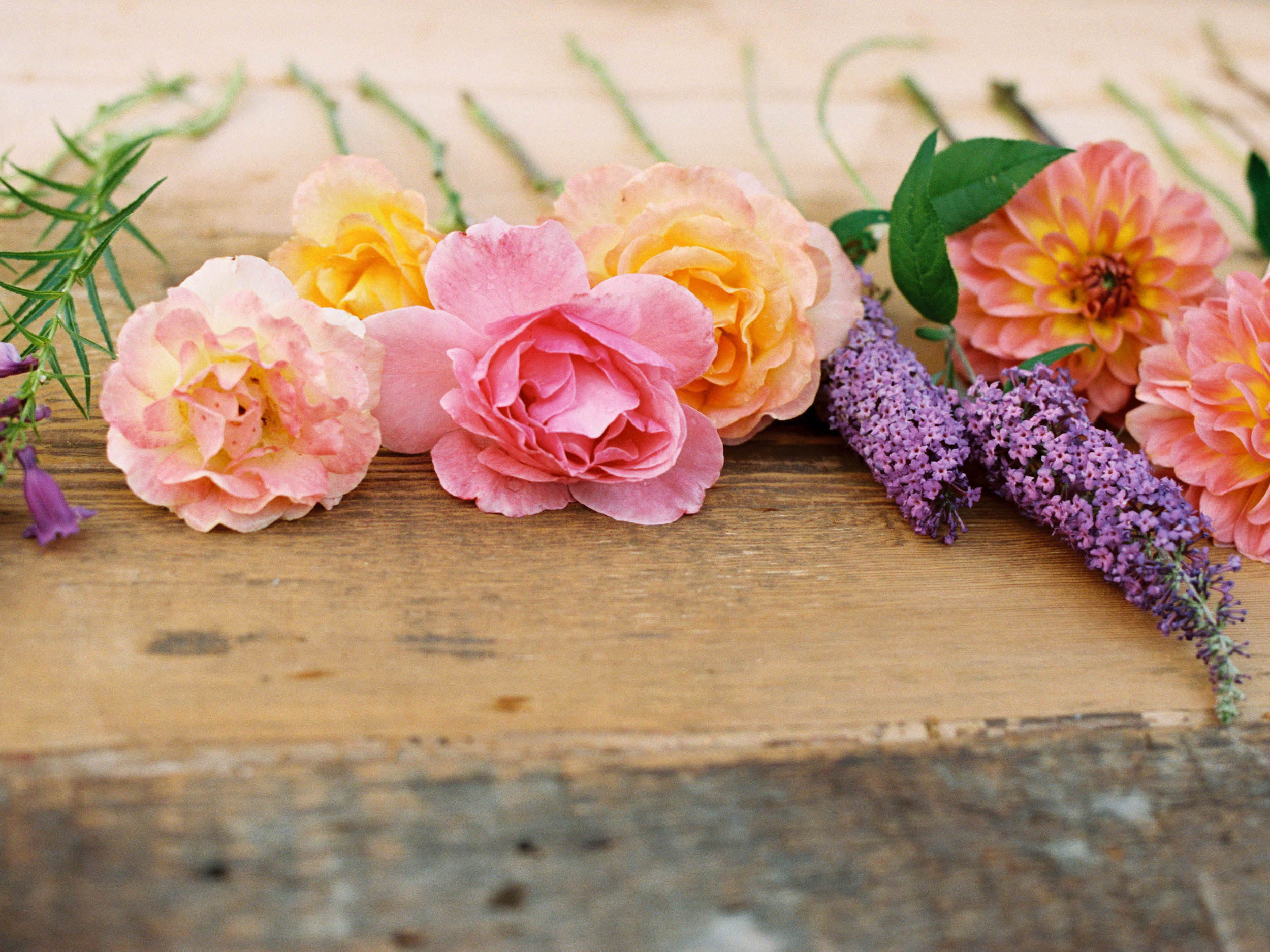 roses and dahlias in bright summer colors