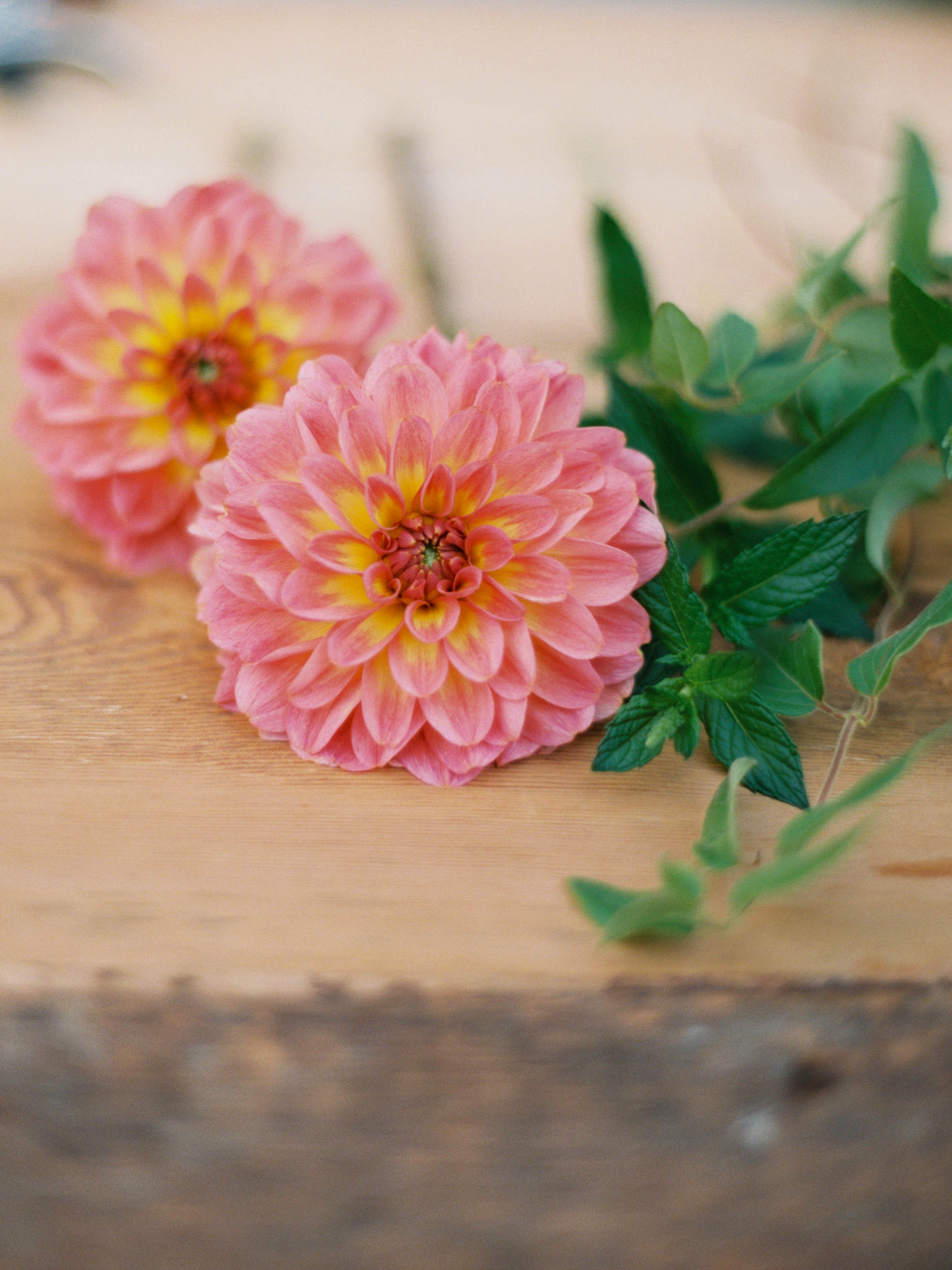 summer dahlias in pink and yellow