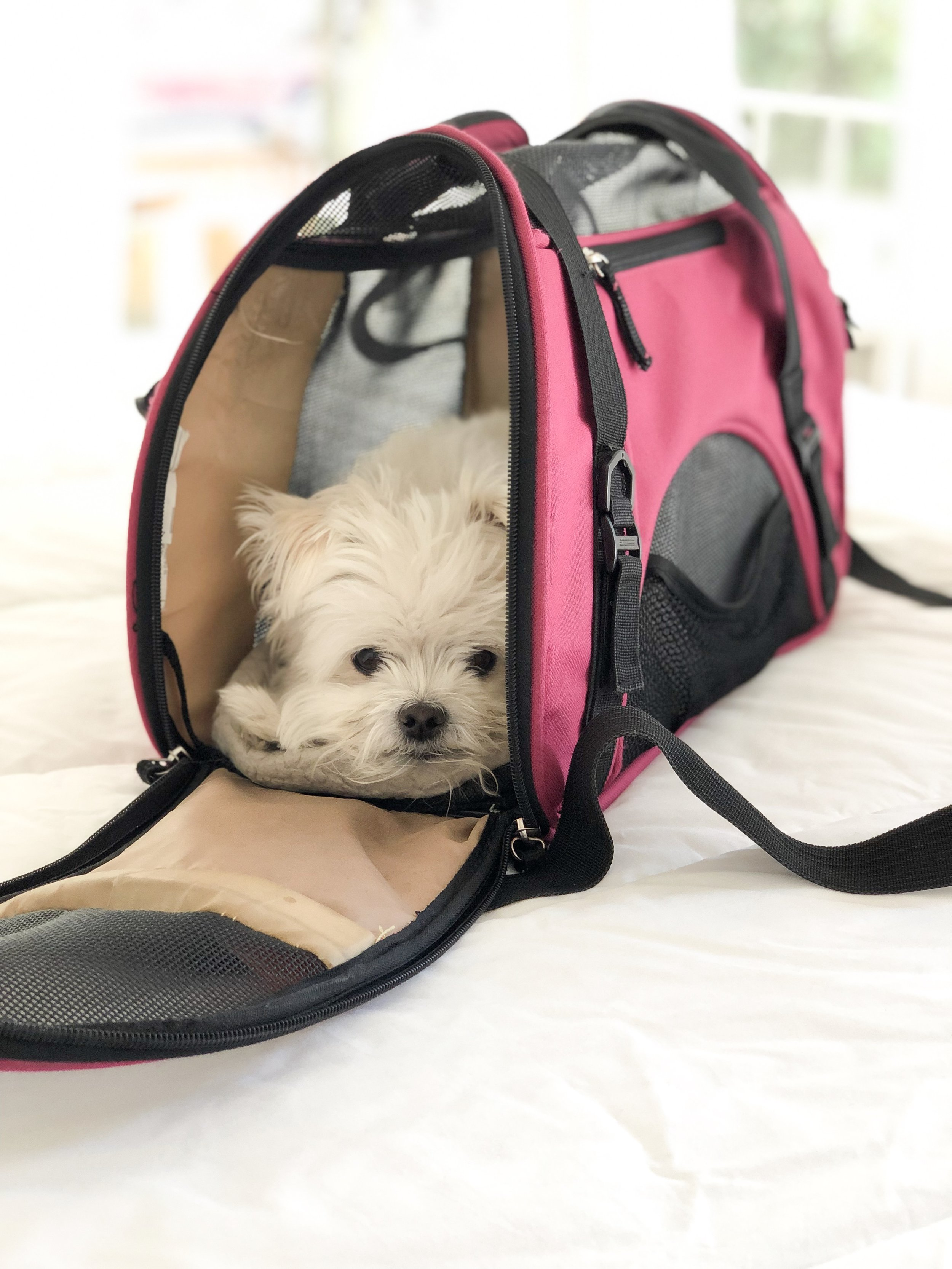 tips for flying with small dogs