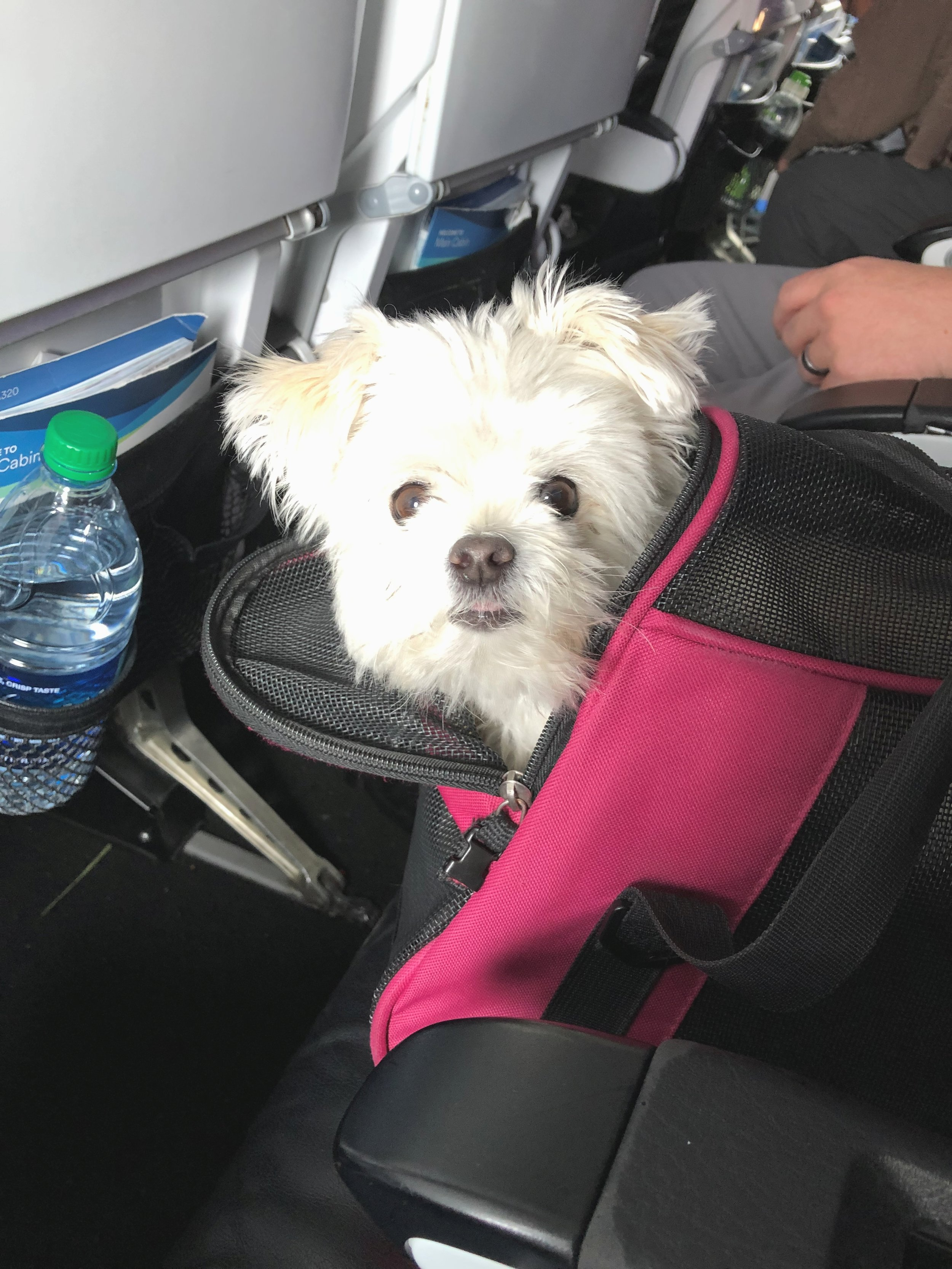 tips for traveling and flying with small dogs