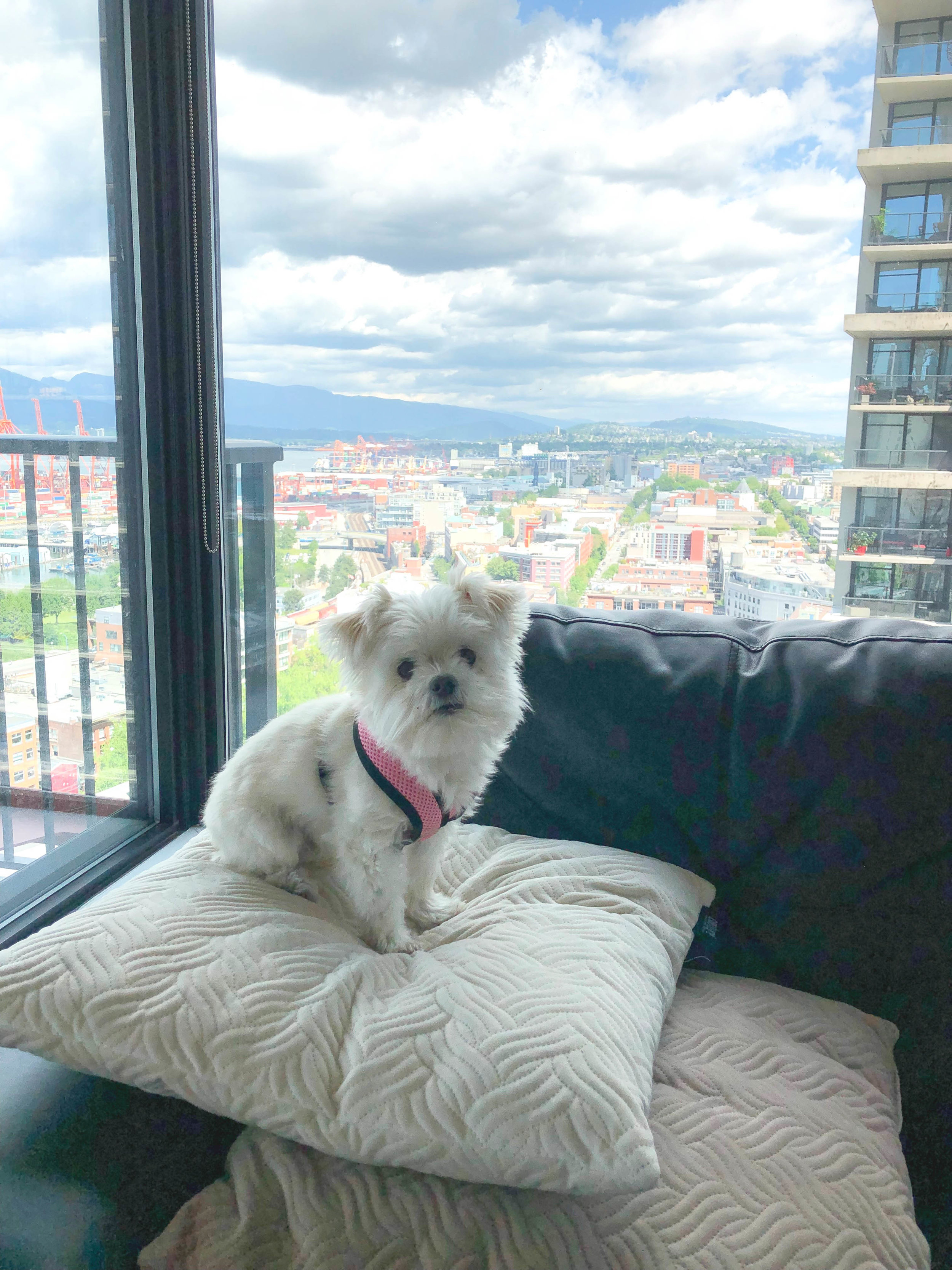 tips for planning vacations with a small dog