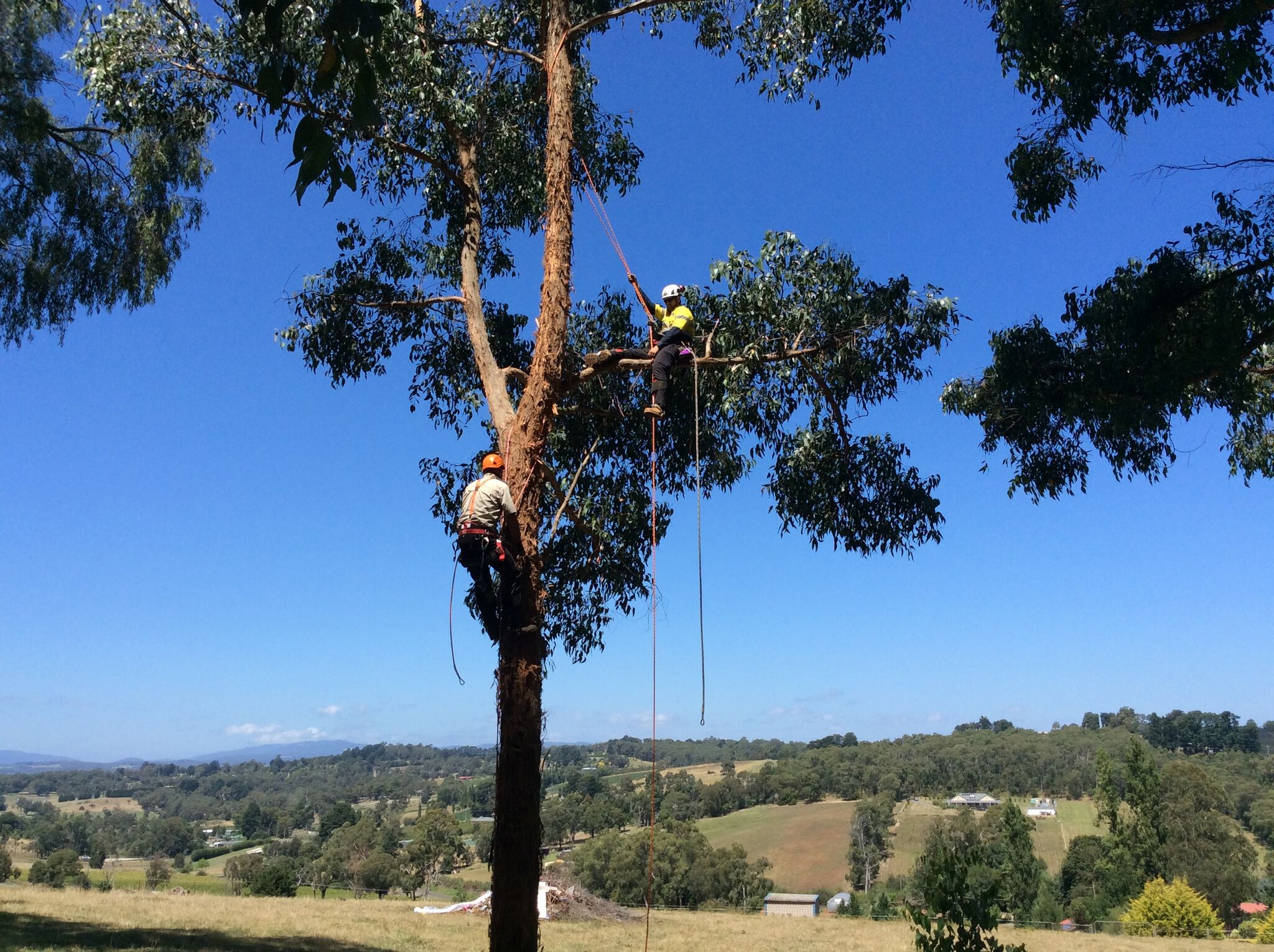 AHC30816 Certificate III in Arboriculture - Prepare arborists for the care and management of trees in conservation and tree preservation roles, tree climbing, tree maintenance, and the diverse operations of professional tree management and urban forestry