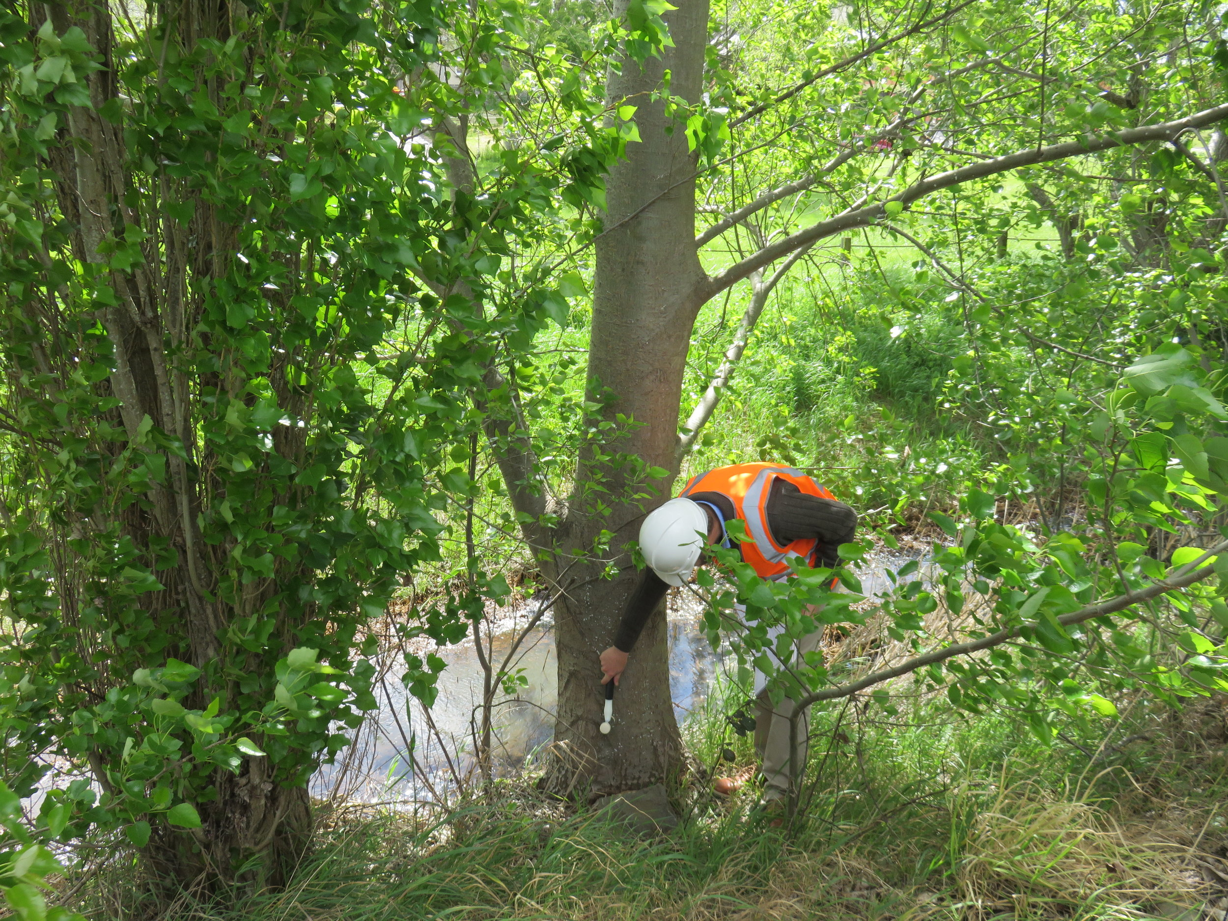 Consultancy - Residential & Amenity Tree InspectionsTree Safety AuditUtility Vegetation Management