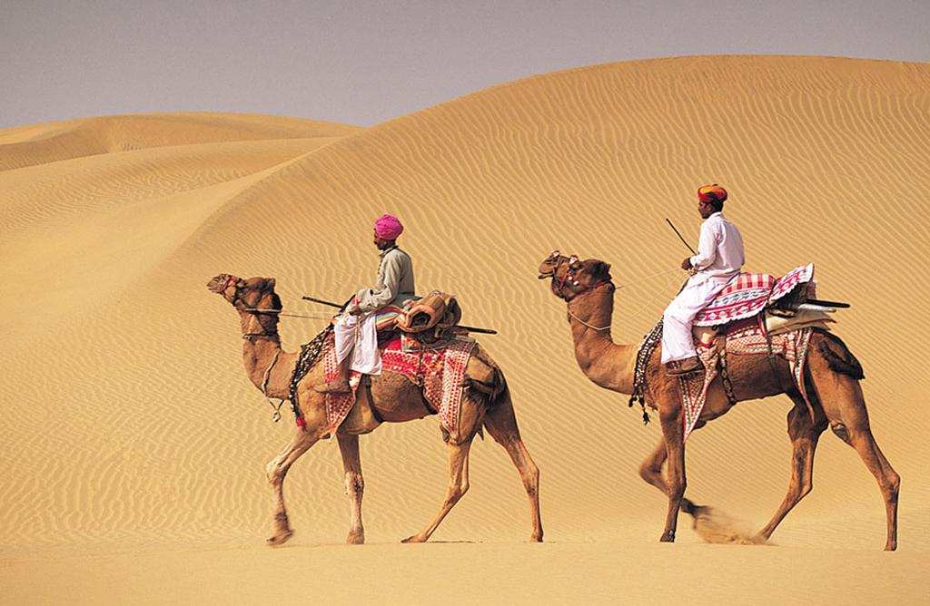 camel riderB.jpg
