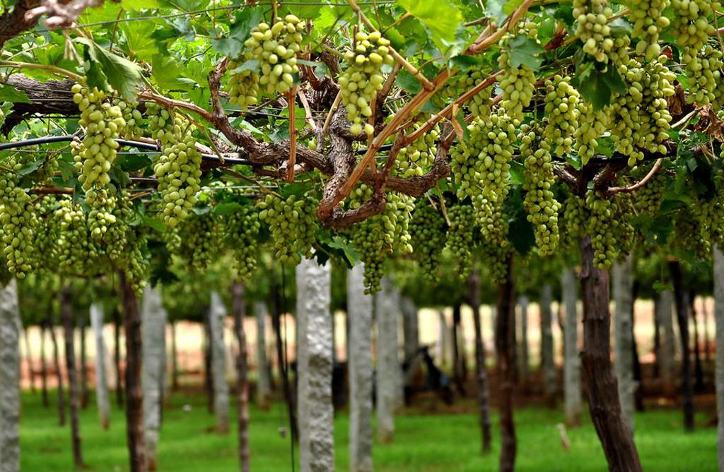 Mumbai food and wine trail