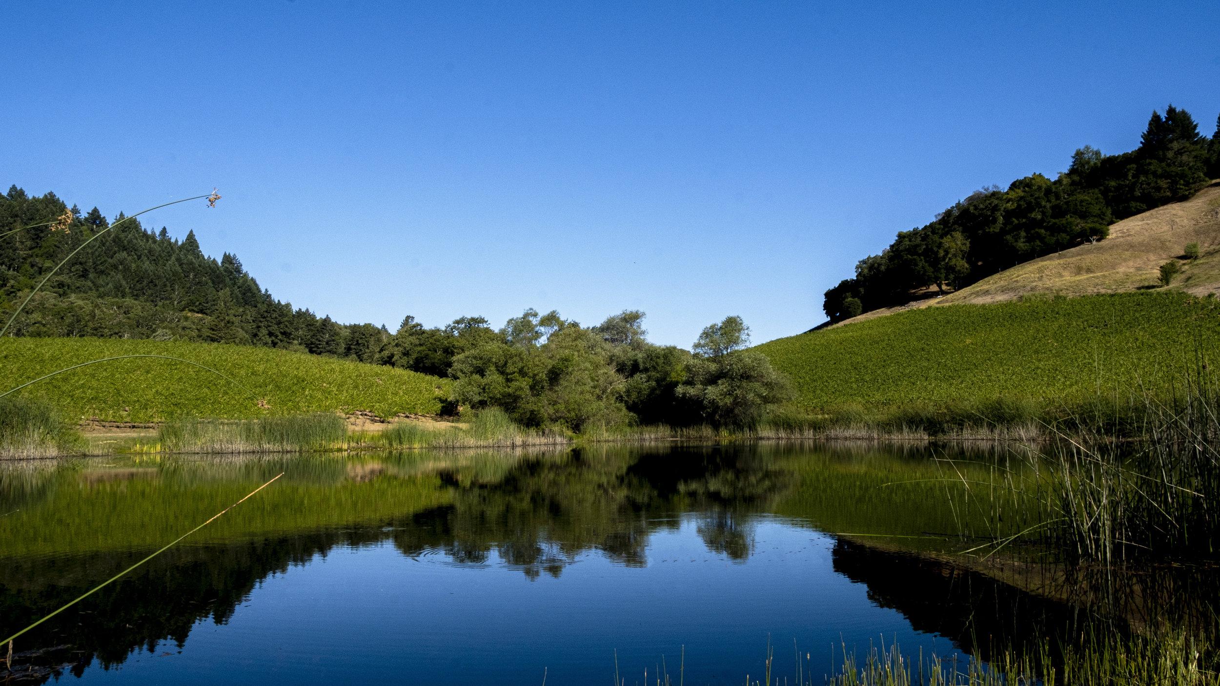 Kinsella Home Page Pond.jpg