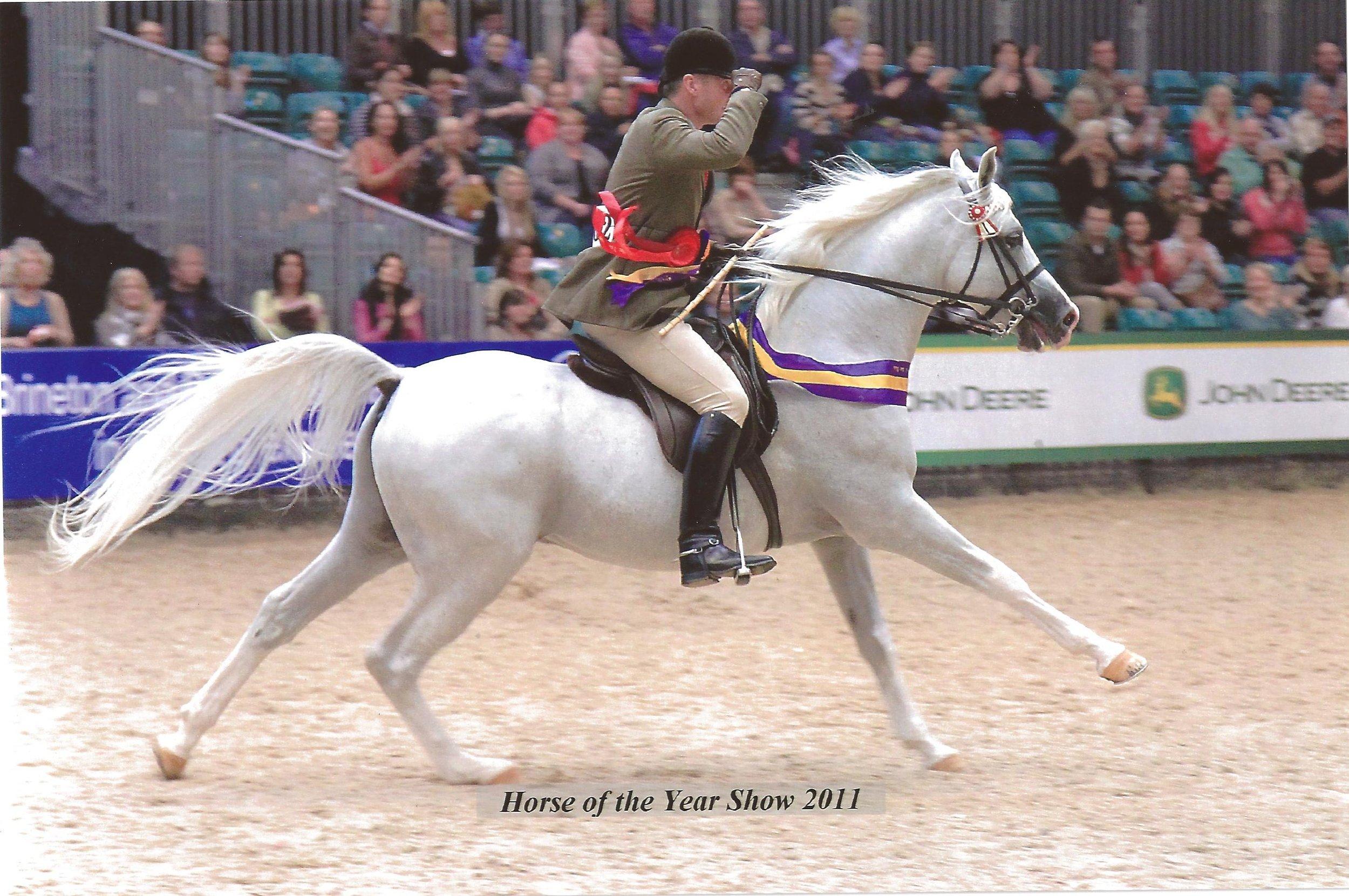 Princey winning at HOYS 2011.jpg