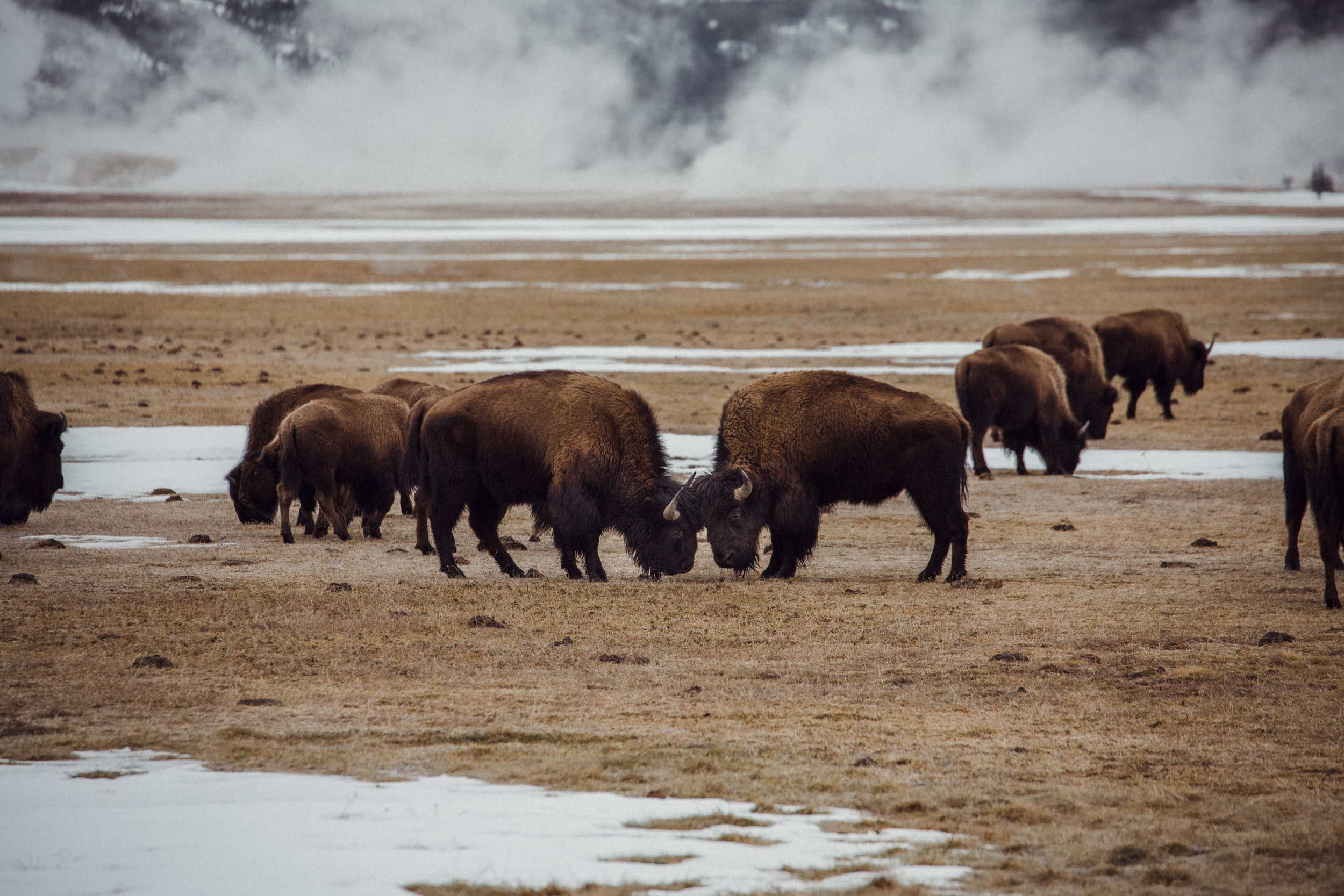 Hudson Bay II - Yellowstone.jpg
