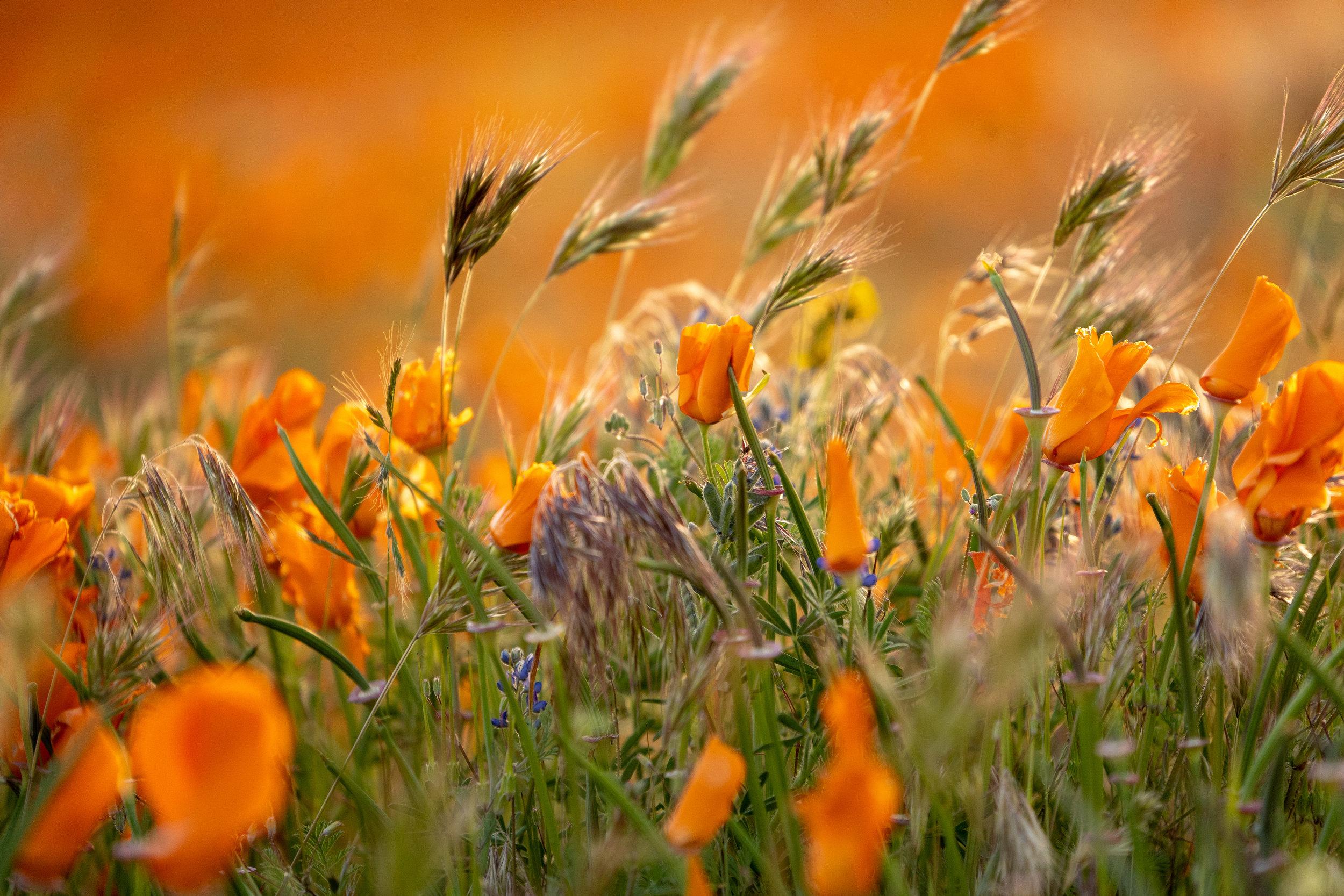 Grassland Diversity Project