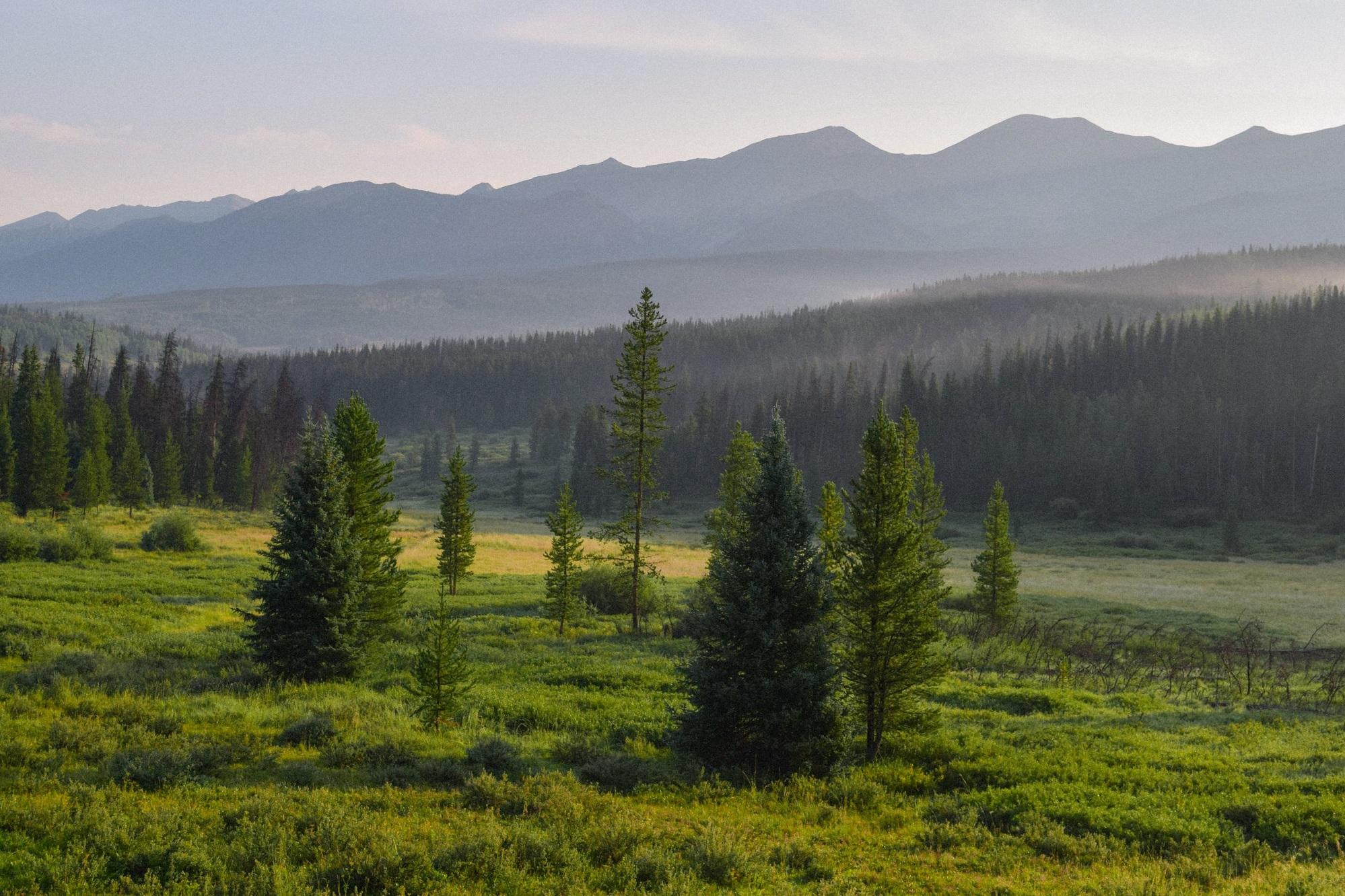 Mountain Riparian Restoration Project