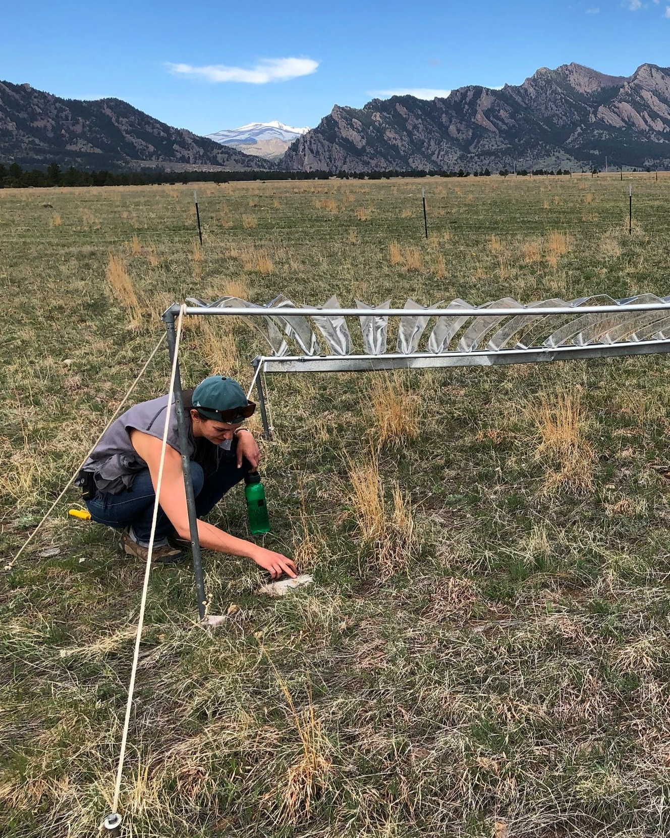 Julie Larson at her drought experiment just south of Boulder