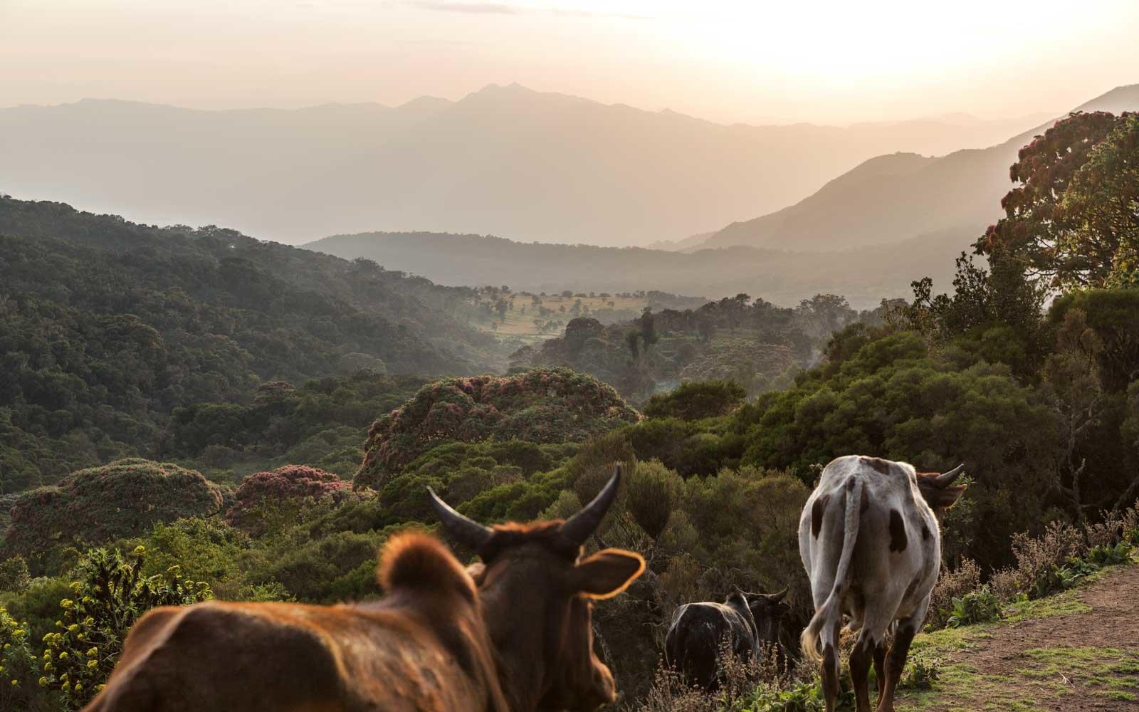 harenna-forest-ETHIOPIA0717.jpg