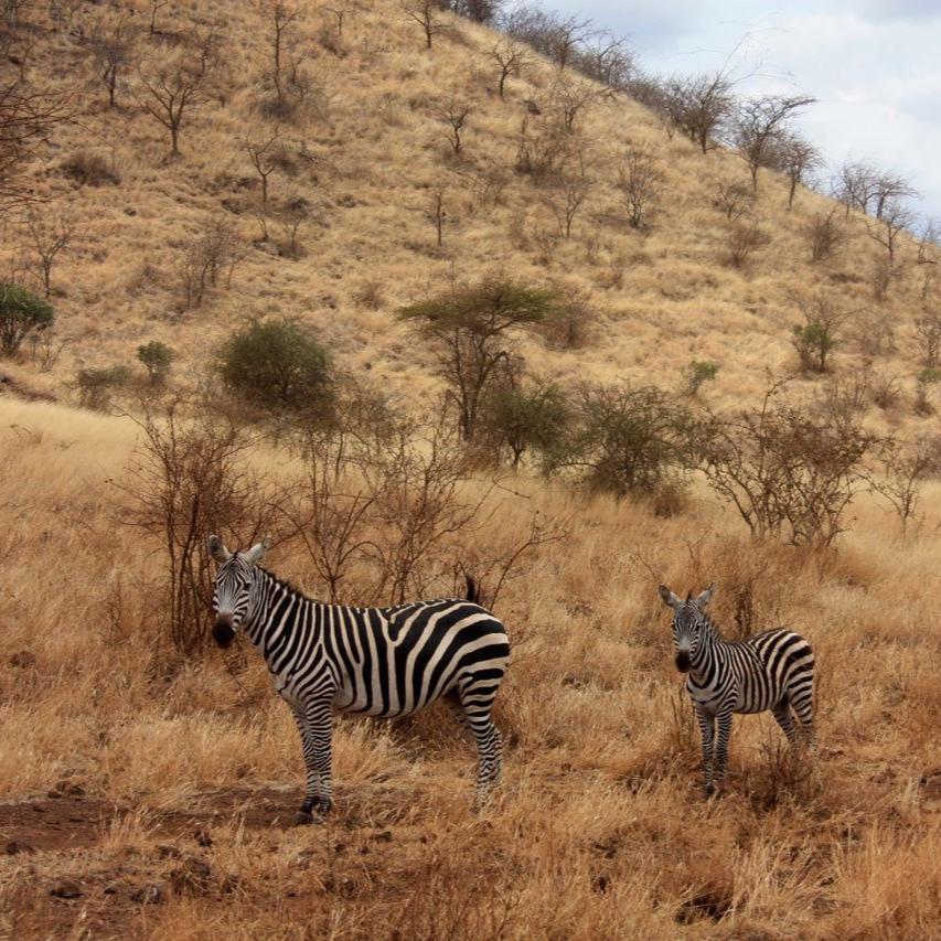 Ethiopia has 9 UNESCO world heritage sites. -