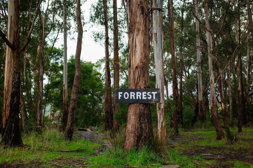 Forrest op shop